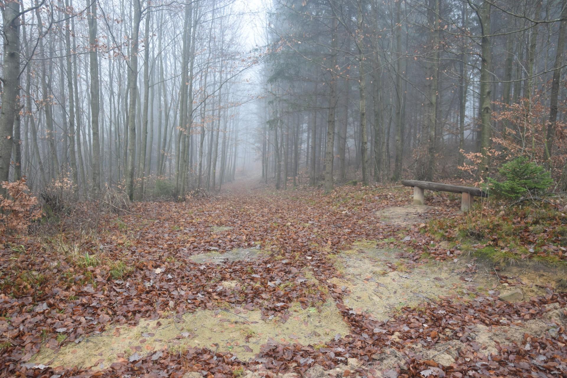 W tym miejscu schodzimy z czerwonego szlaku pieszego. Idziemy ścieżką - na zdjęciu, do Kapliczki Leśnika. Fot. Tomasz Słomczyński/Magazyn Kaszuby