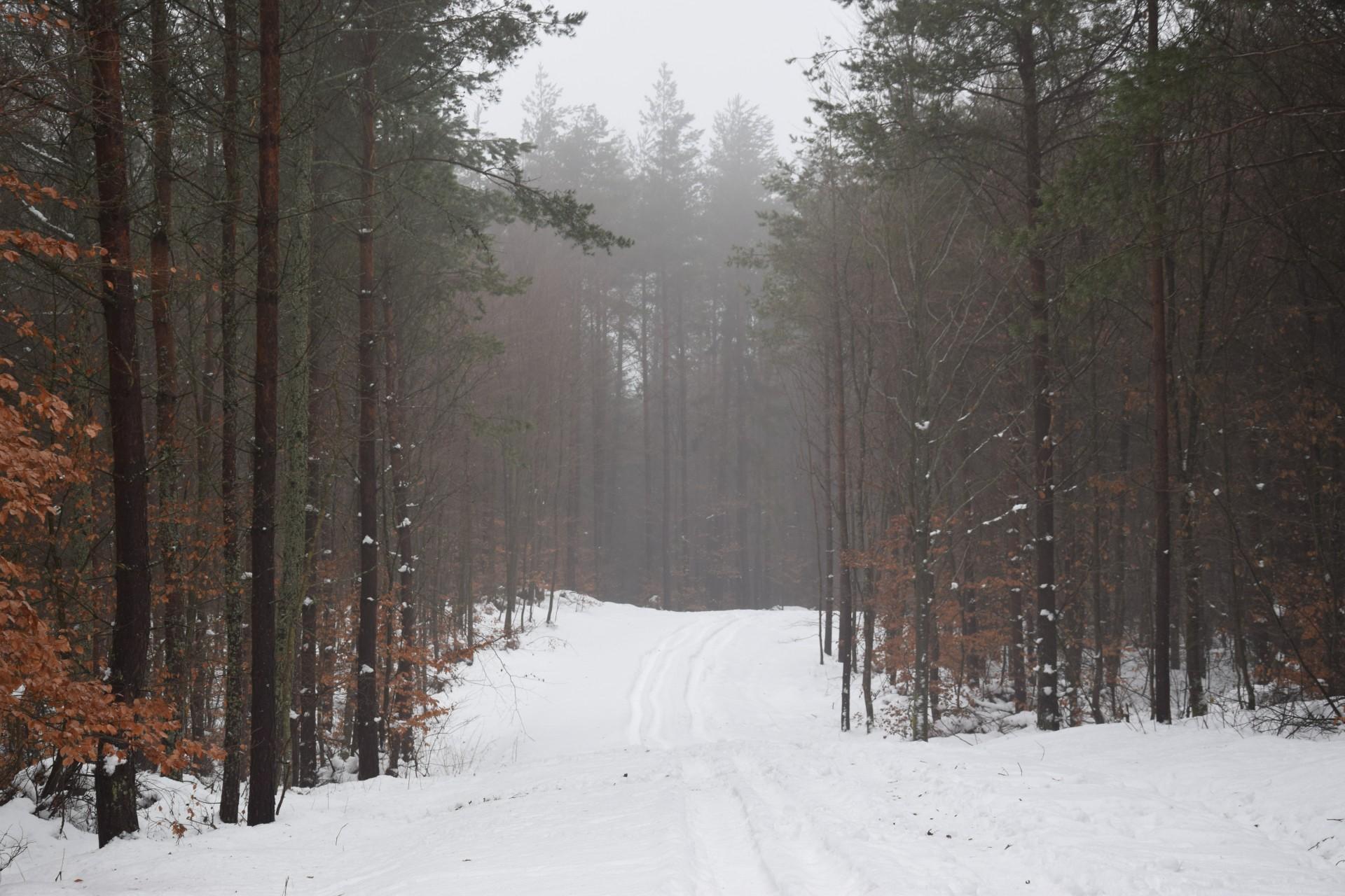 Las zimą. Fot. Tomasz Słomczyński/Magazyn Kaszuby