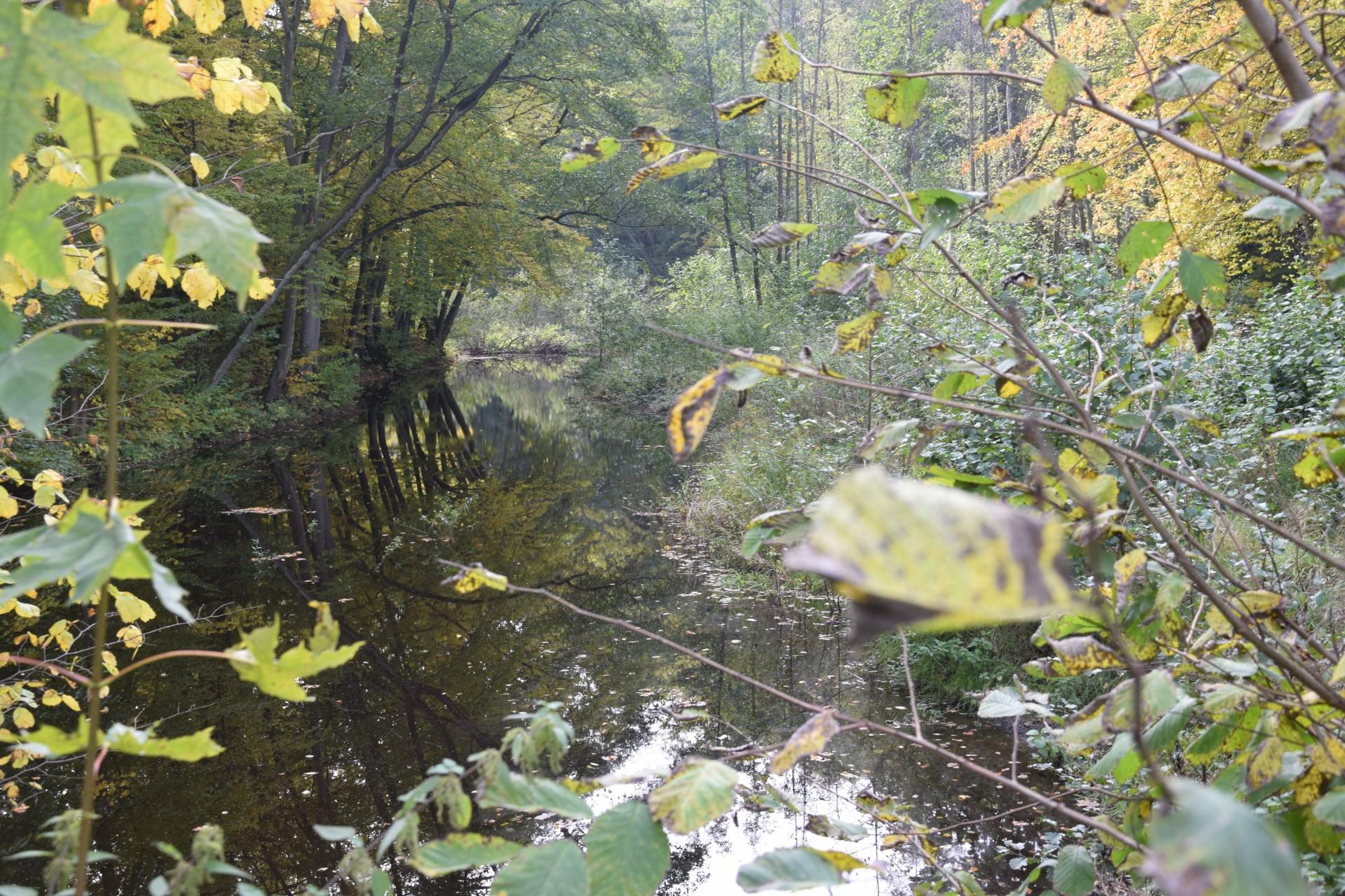 Wieś krzyżacka, rzeka niczym z gór [FILM] 7