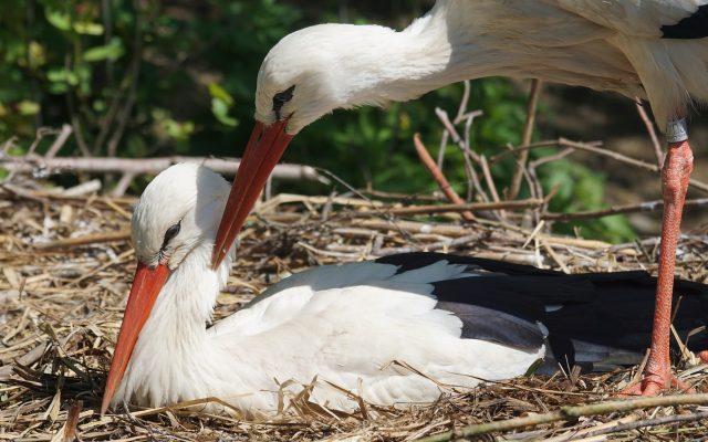 Tajemnicze, złe i opiekuńcze. Ptaki w kaszubskich wierzeniach 2