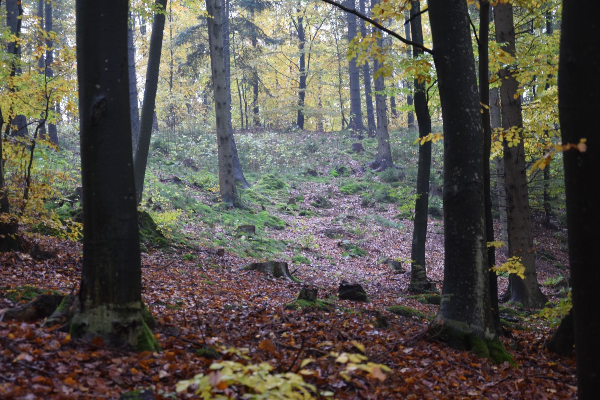 W lesie koło Kartuz. Fot. Tomasz Słomczyński/Magazyn Kaszuby