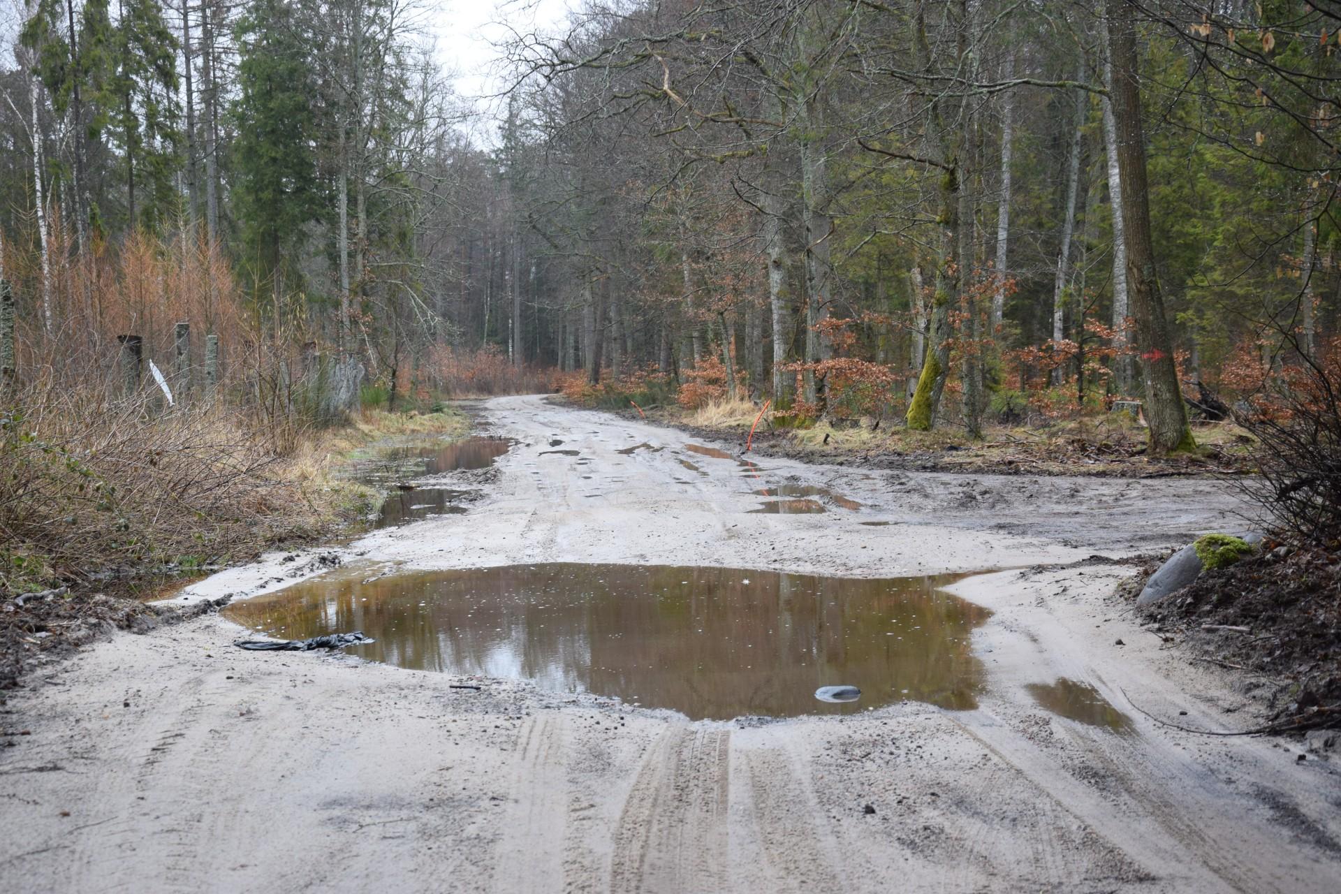 Droga Wejherowo - Celbowo, stan istniejący. Fot. Tomasz Słomczyński/Magazyn Kaszuby