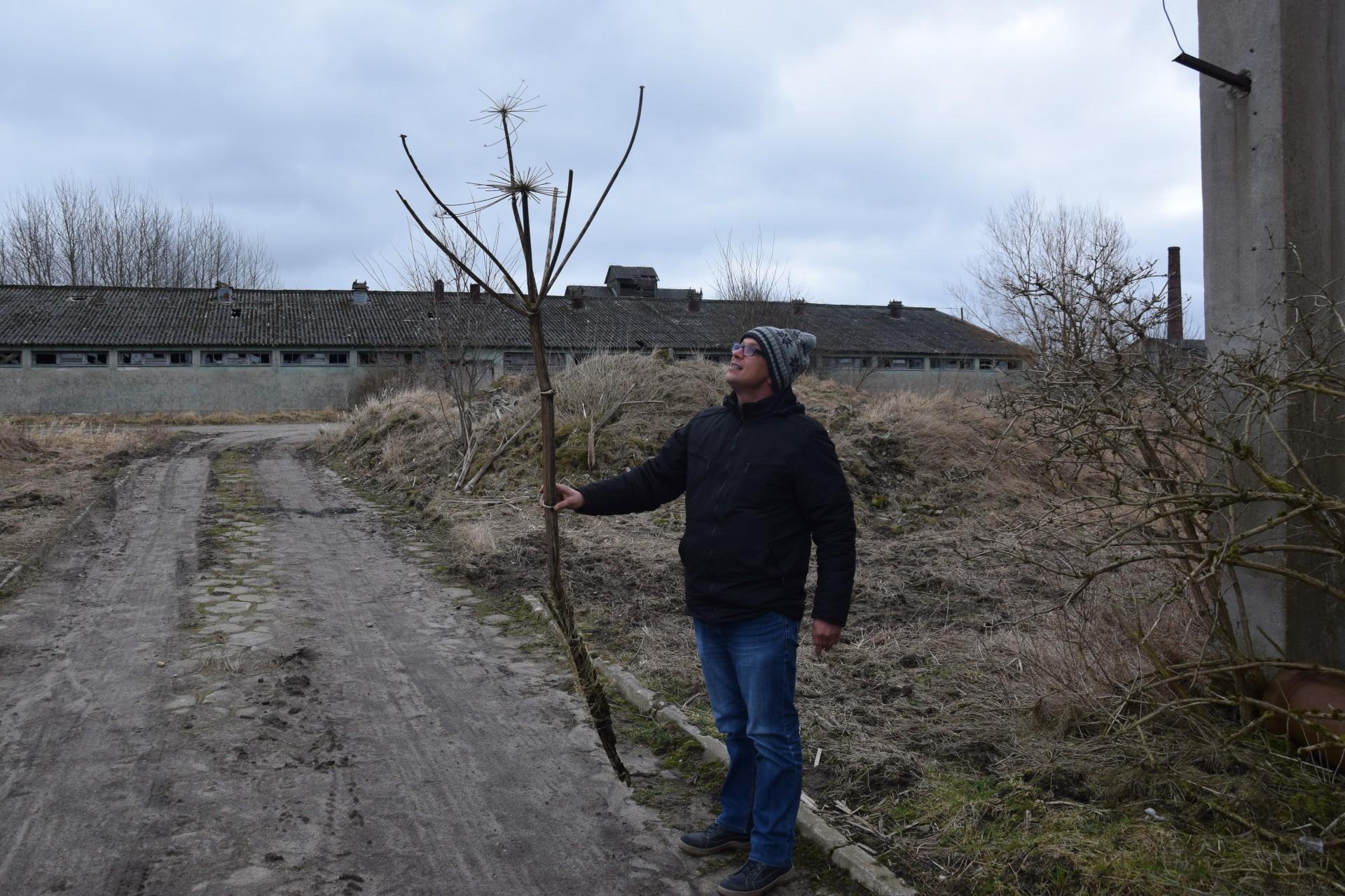 Barszcz Sosnowskiego. Został w pegeerze 3