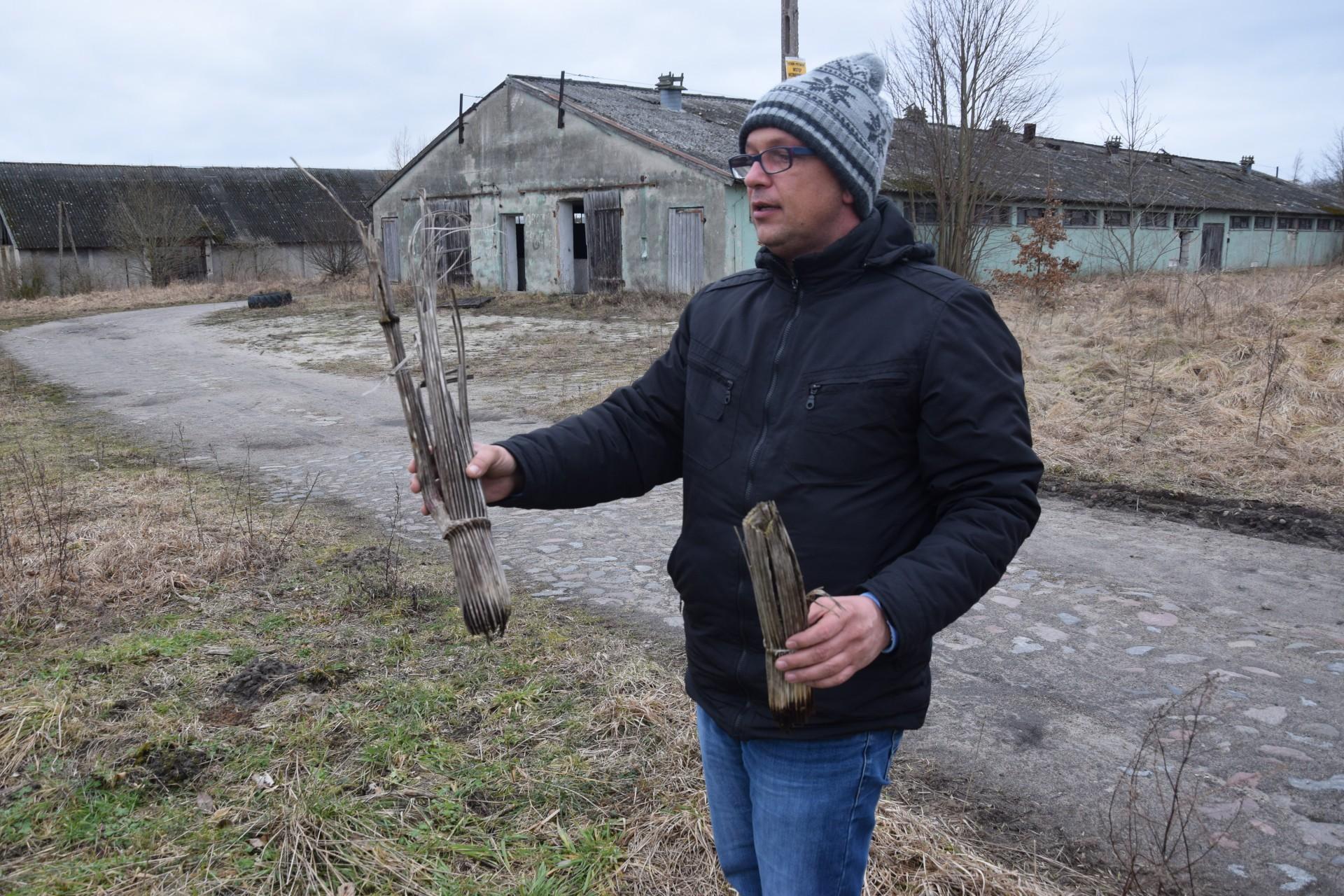 Barszcz Sosnowskiego. Został w pegeerze 4