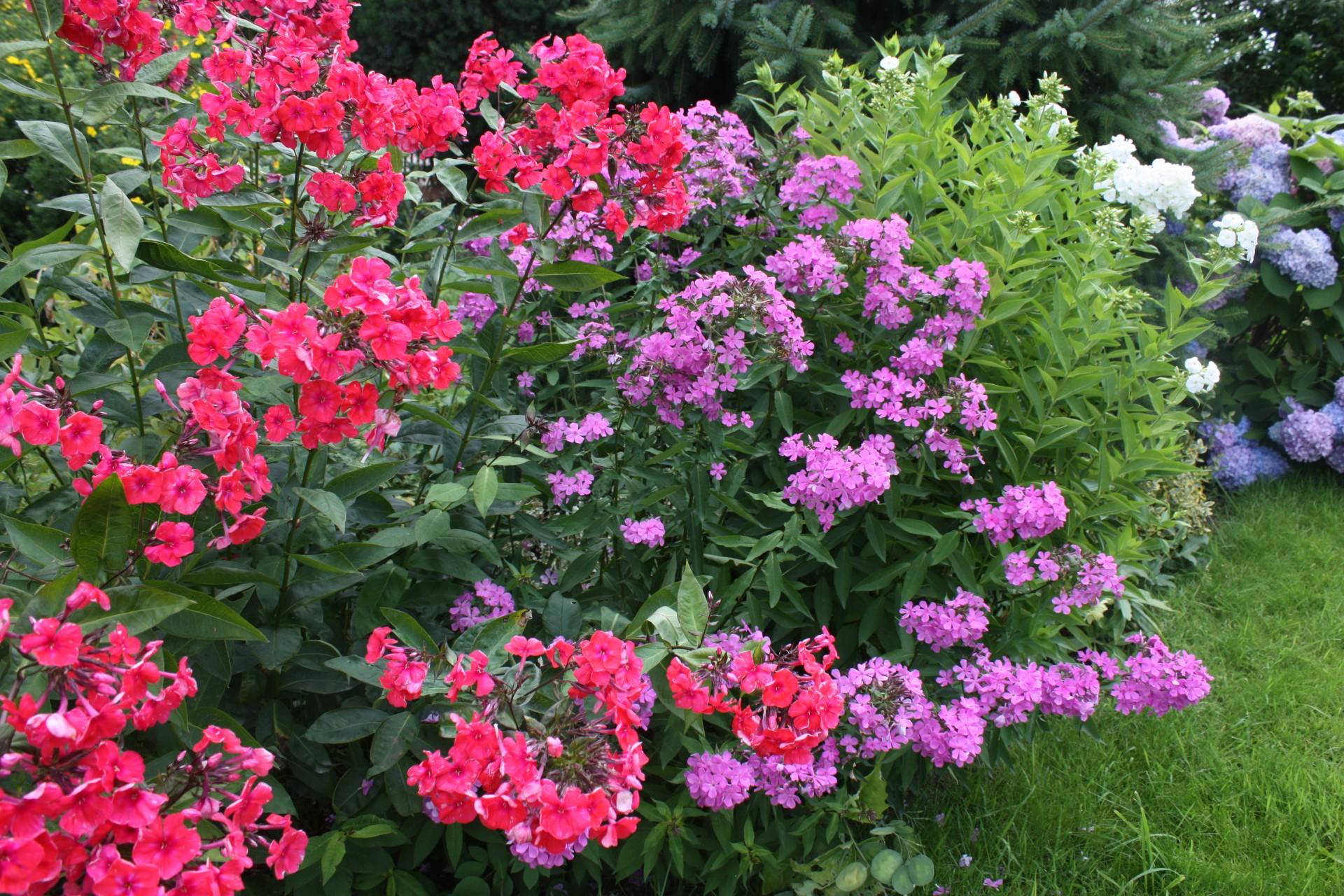 Kaszubskie ogrody. Jakie kwiaty tu rosną? 10