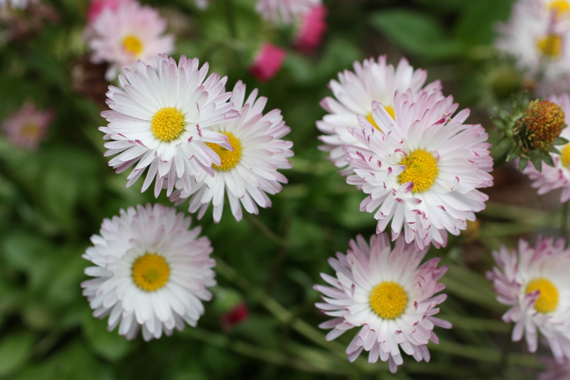 Kaszubskie ogrody. Jakie kwiaty tu rosną? 12