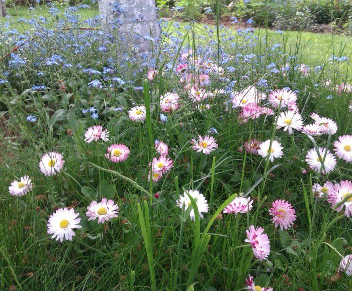 Kaszubskie ogrody. Jakie kwiaty tu rosną? 13