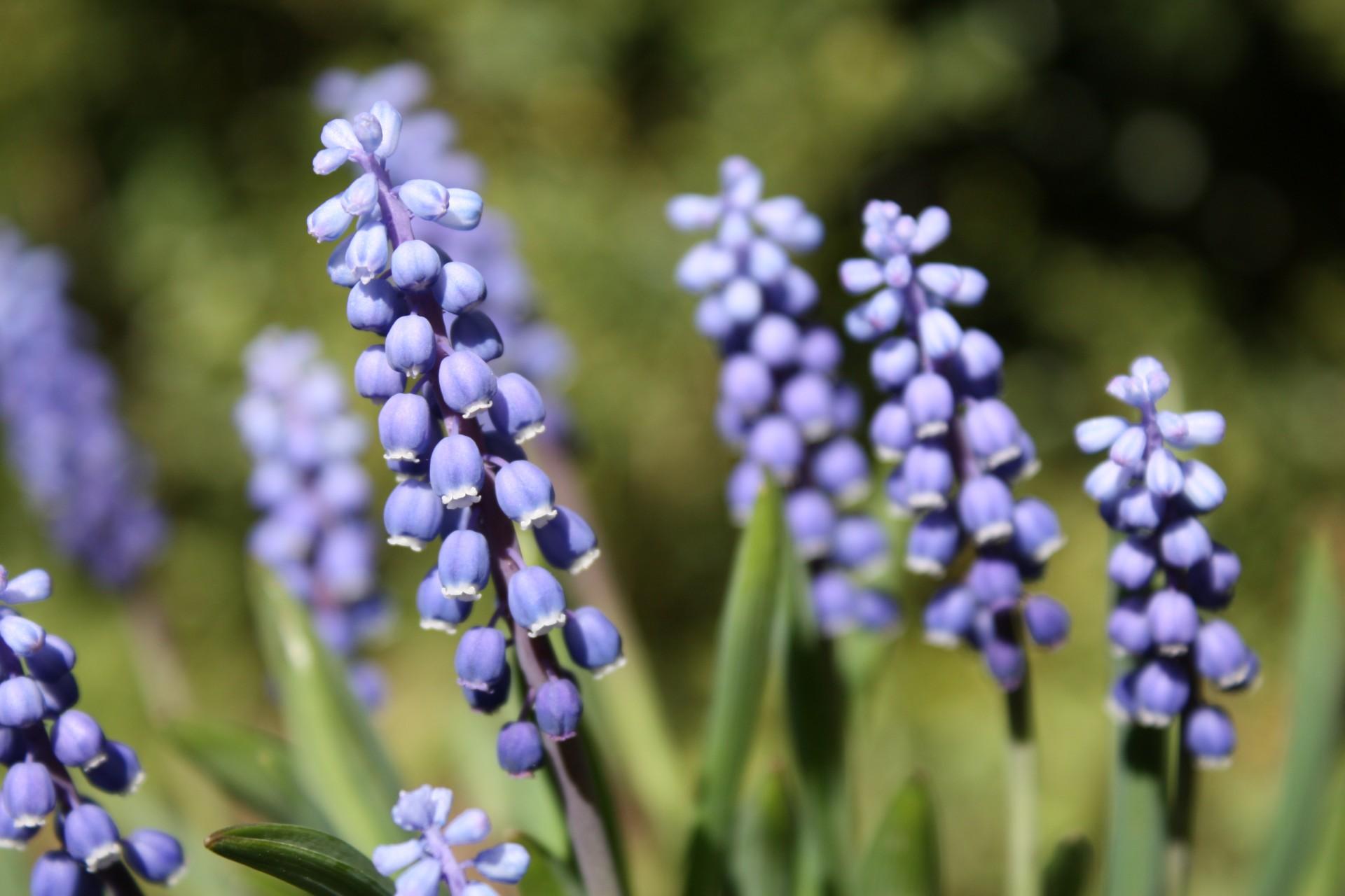 Kaszubskie ogrody. Jakie kwiaty tu rosną? 14
