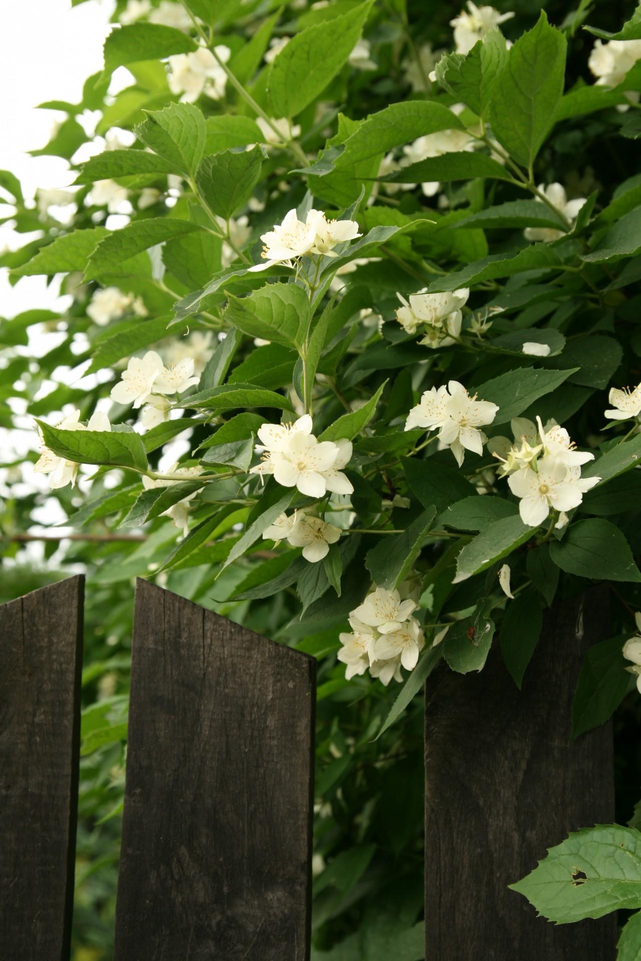 Kaszubskie ogrody. Jakie kwiaty tu rosną? 4
