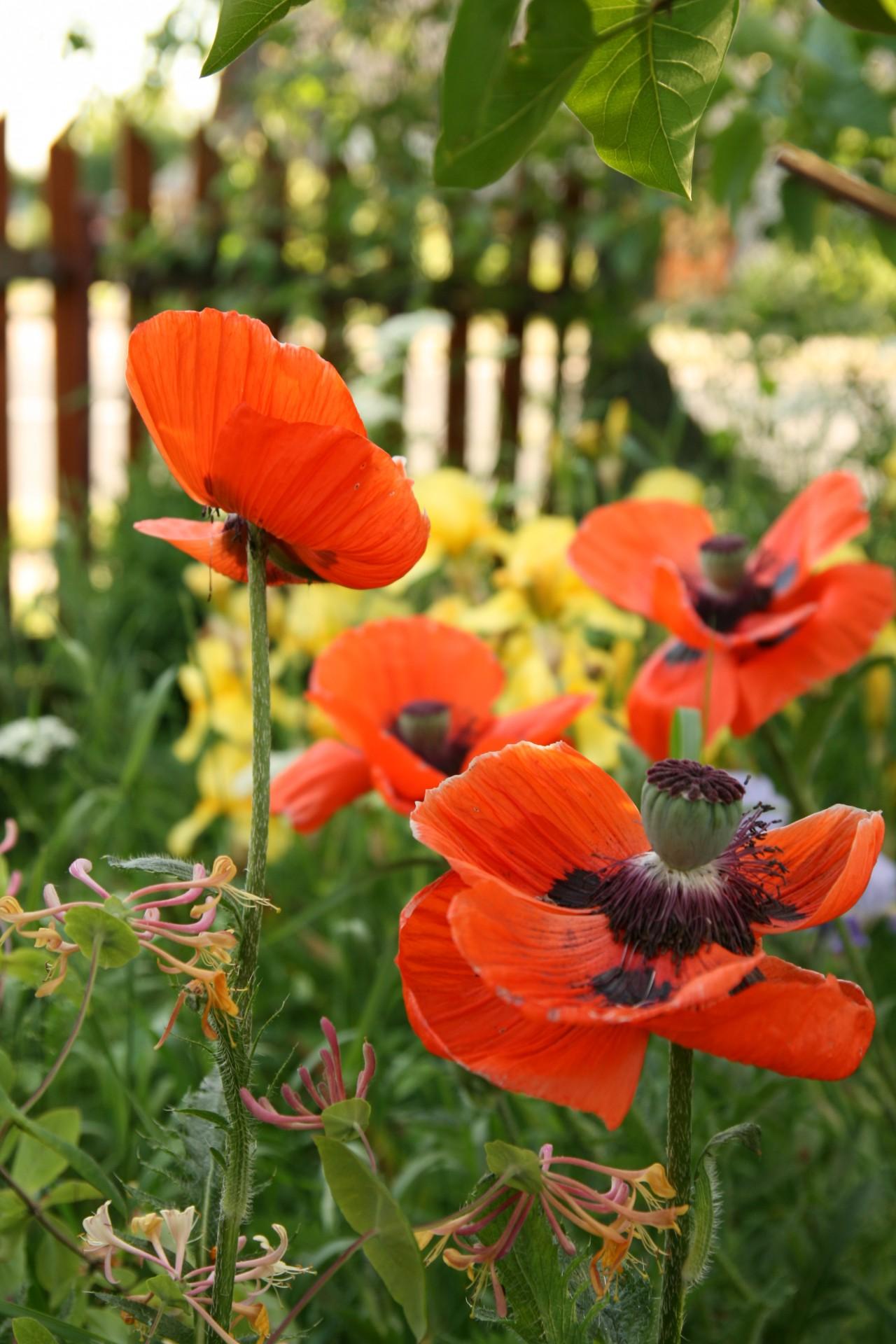 Kaszubskie ogrody. Jakie kwiaty tu rosną? 5