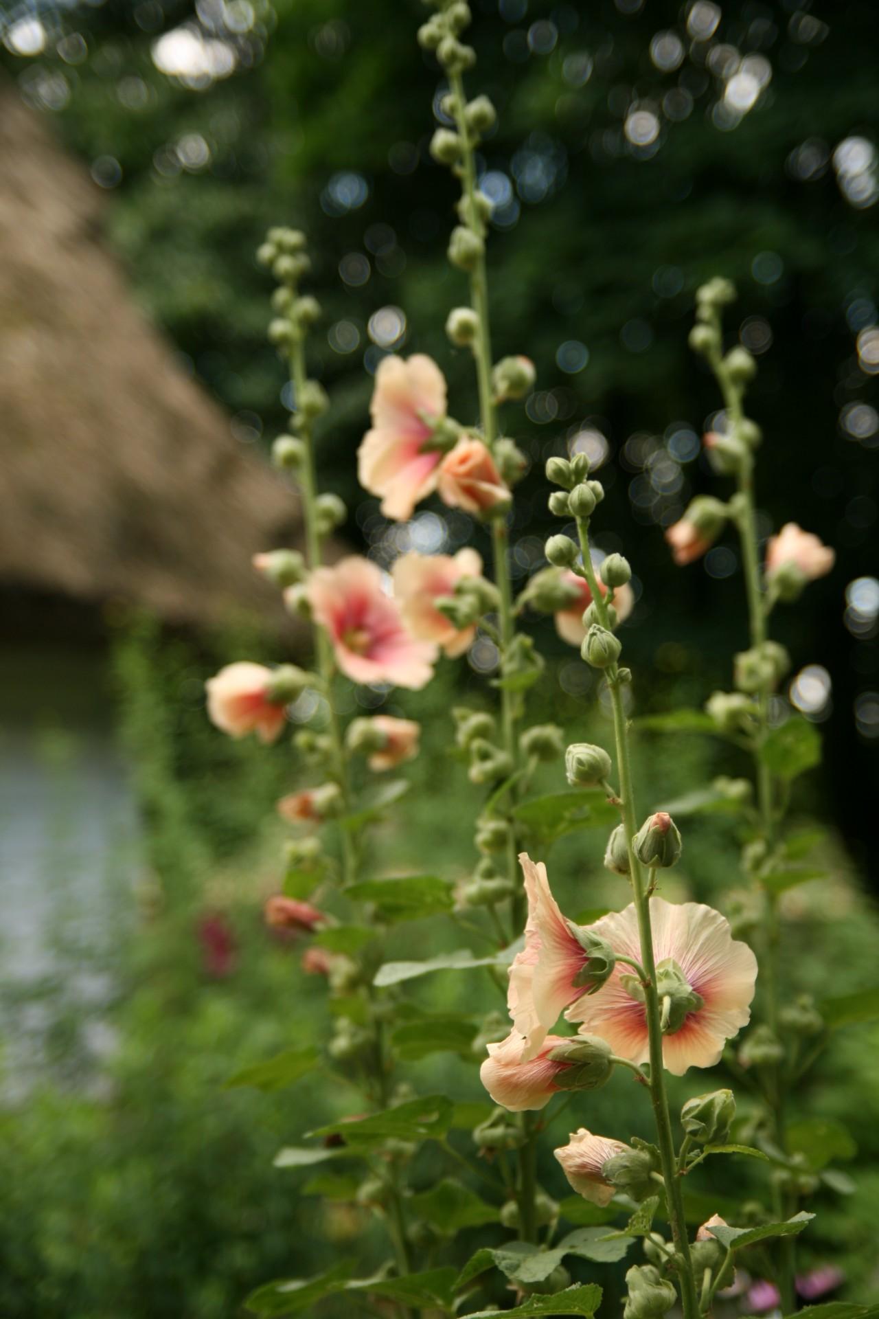 Kaszubskie ogrody. Jakie kwiaty tu rosną? 6