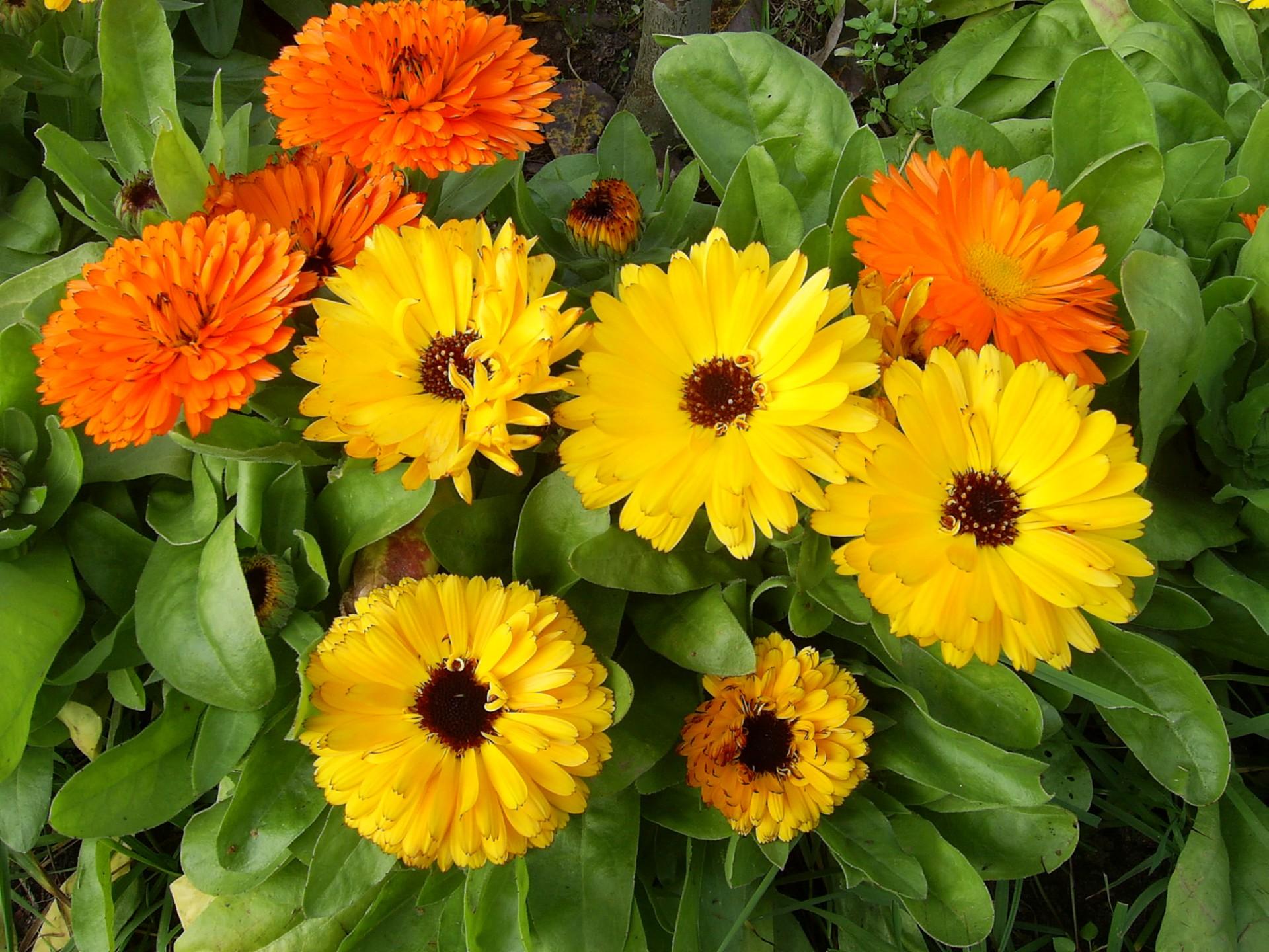 Kaszubskie ogrody. Jakie kwiaty tu rosną? 7
