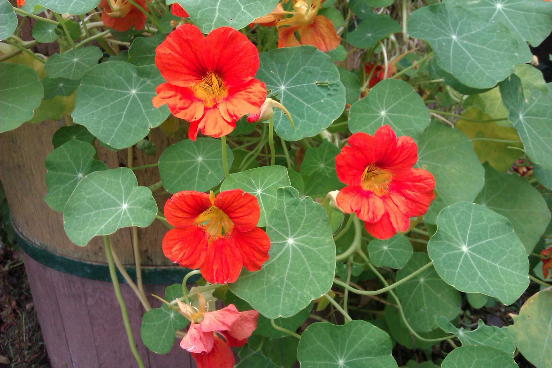 Kaszubskie ogrody. Jakie kwiaty tu rosną? 8