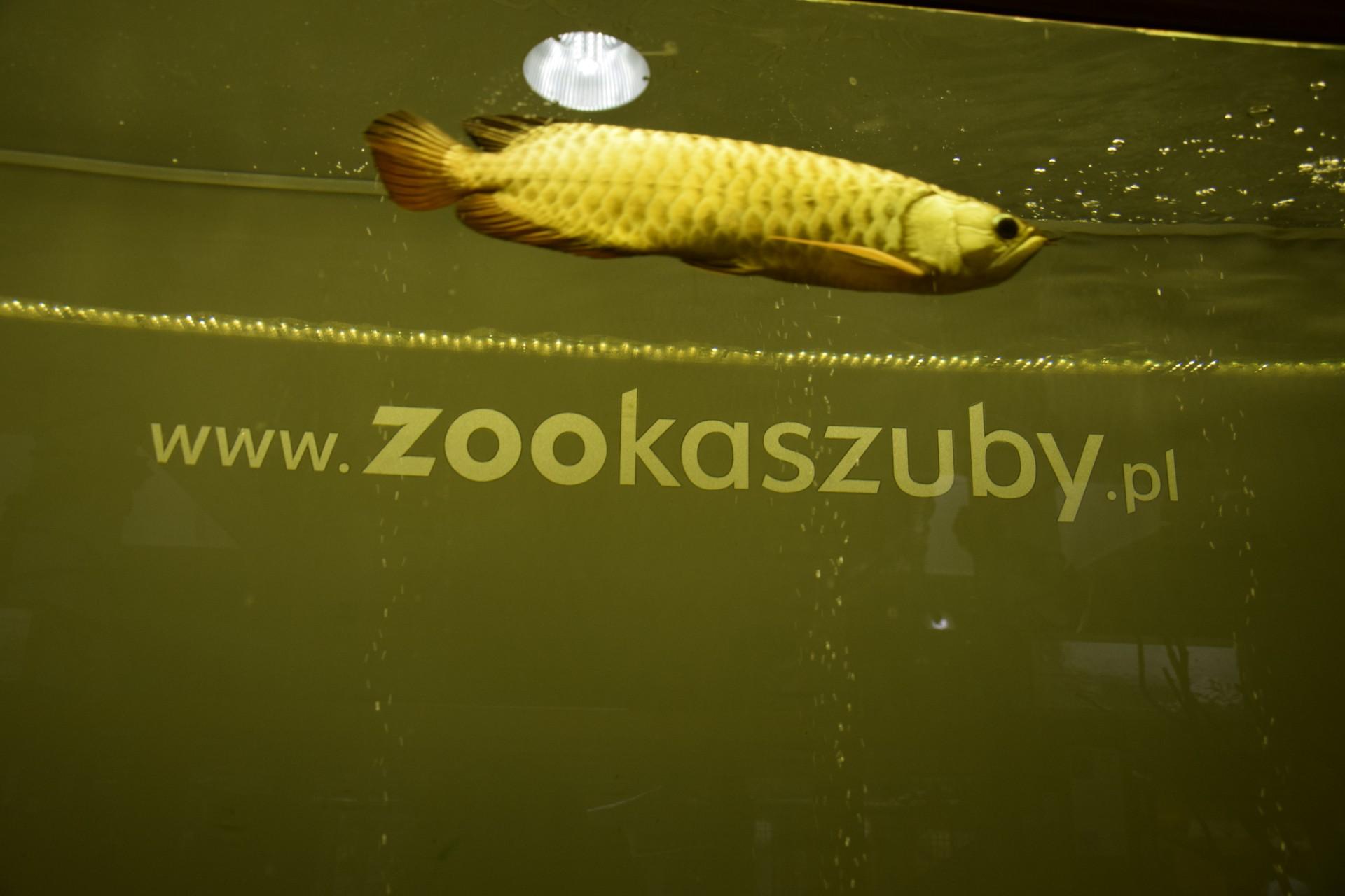ZOO w Tuchlinie. Egzotyczne Kaszuby. Fot. Tomasz Słomczyński/Magazyn Kaszuby