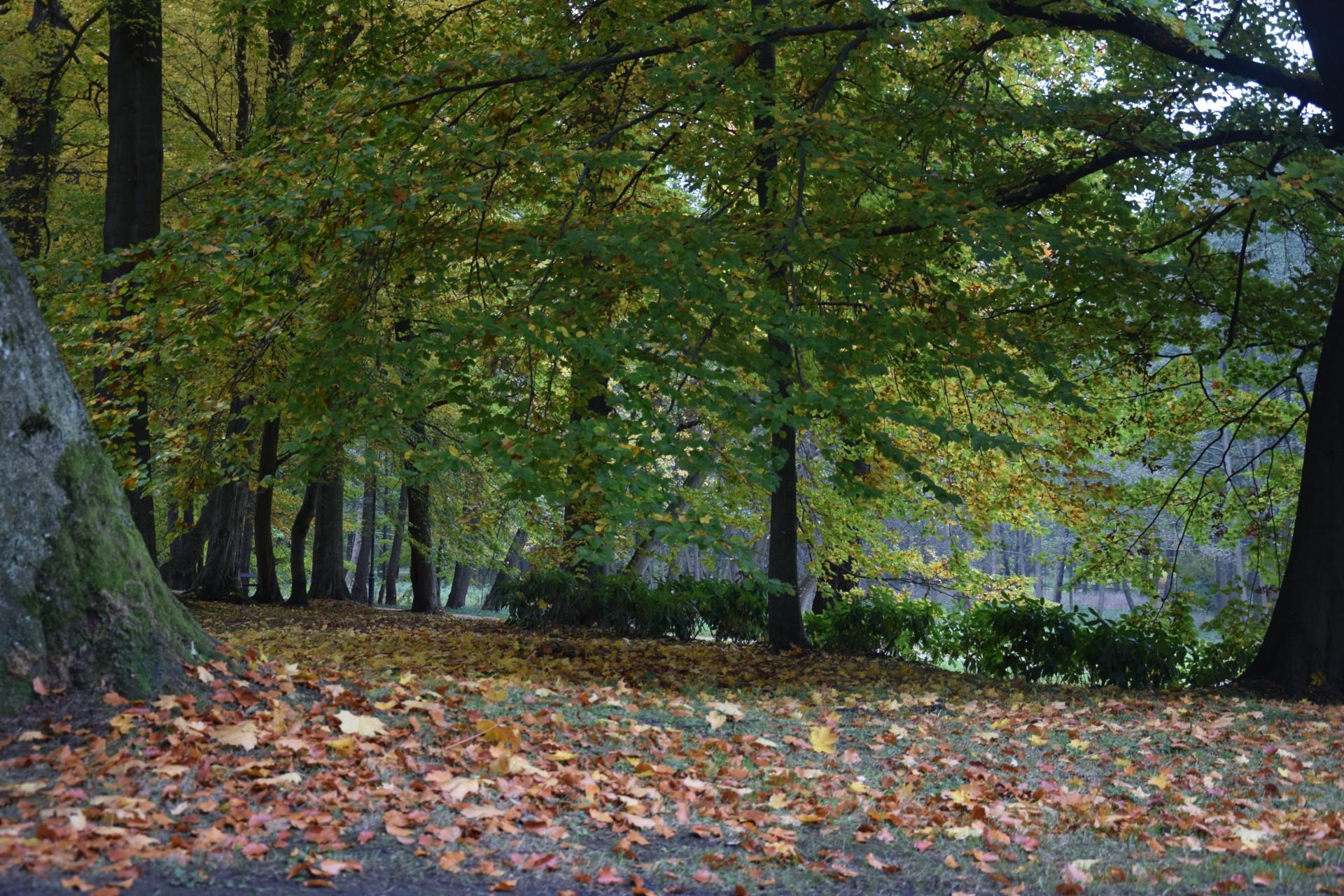Foki w parku w Wejherowie. To dobry pomysł? 1