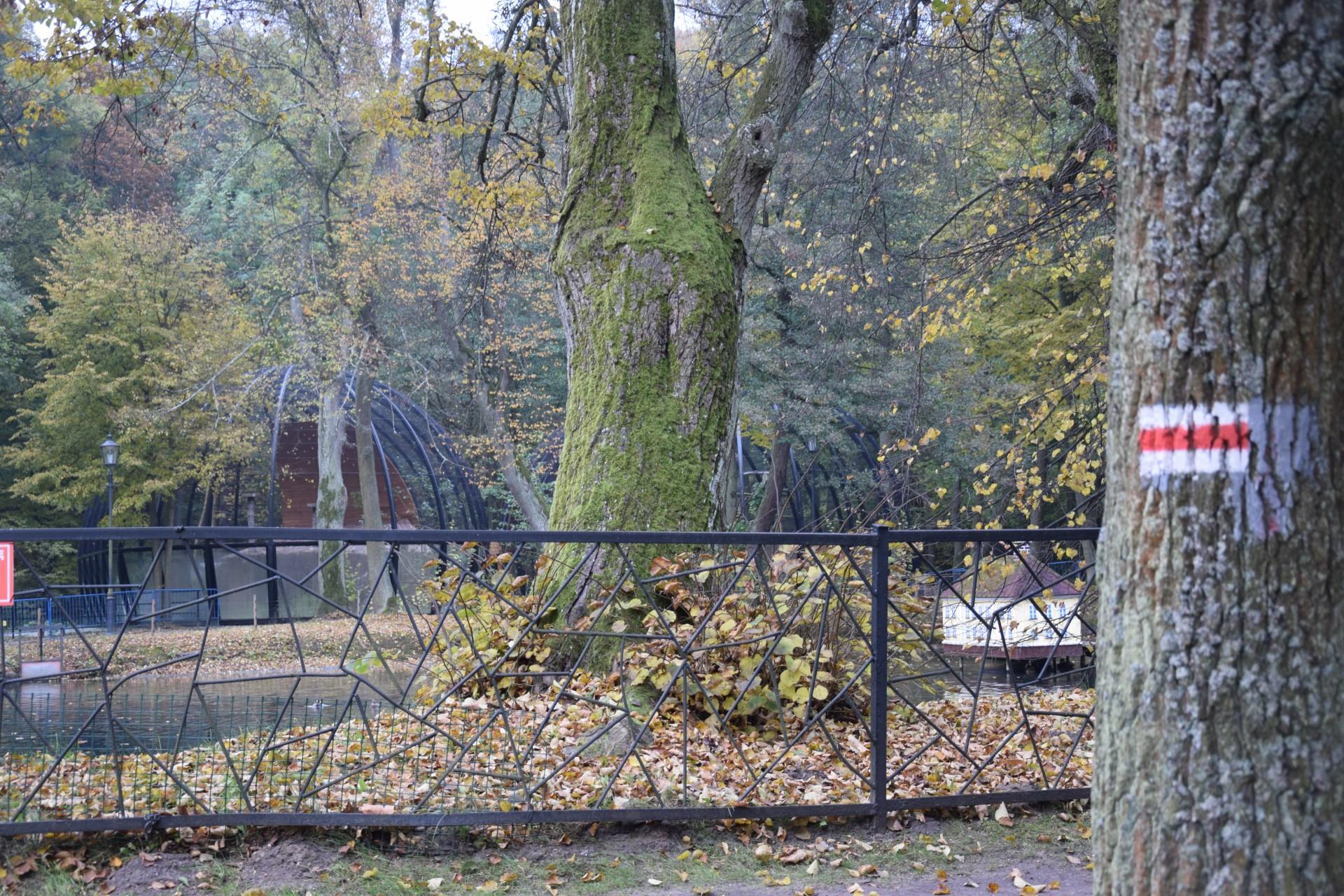 Foki w parku w Wejherowie. To dobry pomysł? 5