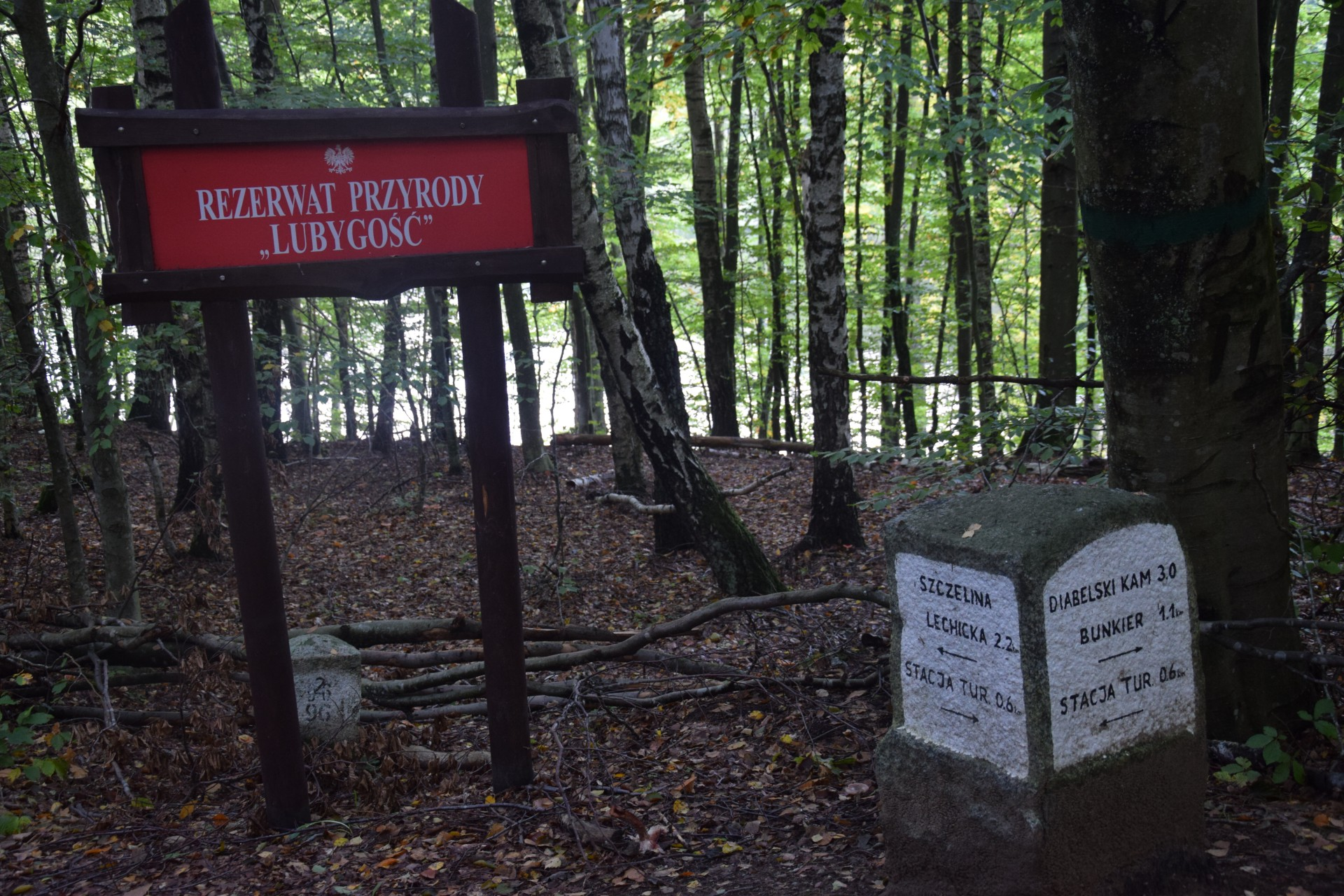 Przewodnik Magazynu Kaszuby: Lasy Mirachowskie 13