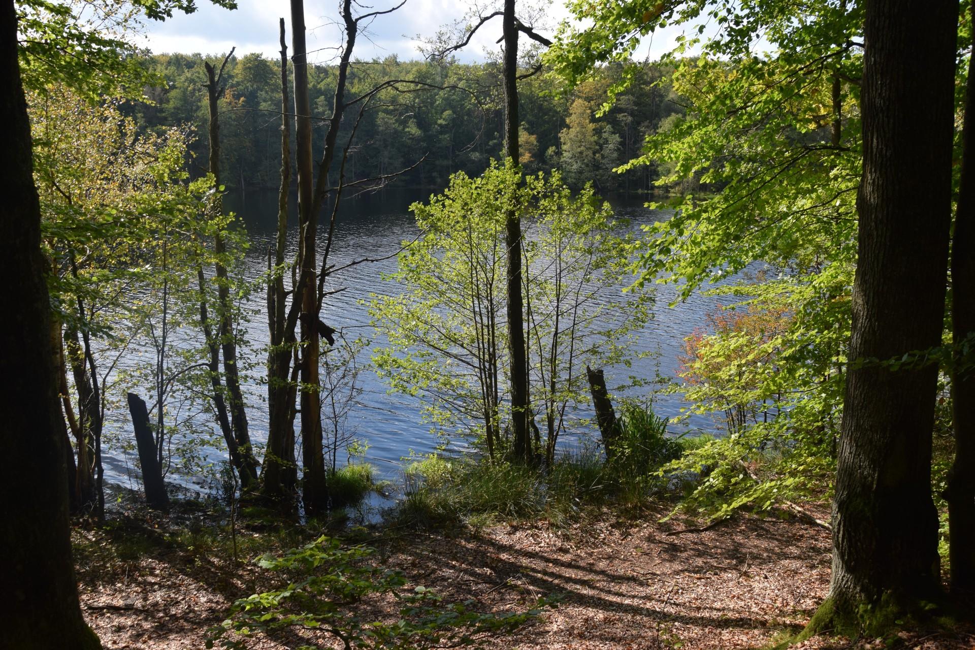 Przewodnik Magazynu Kaszuby: Lasy Mirachowskie 18