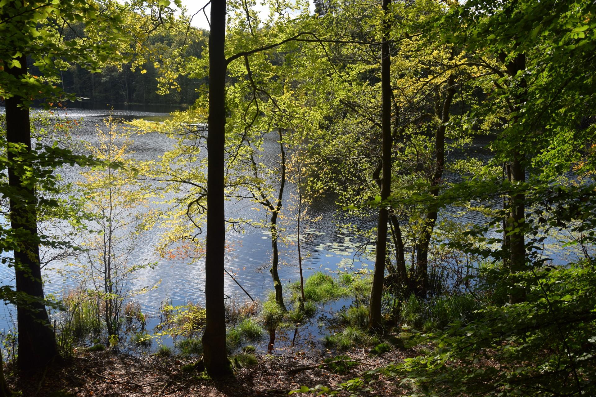 Przewodnik Magazynu Kaszuby: Lasy Mirachowskie 20