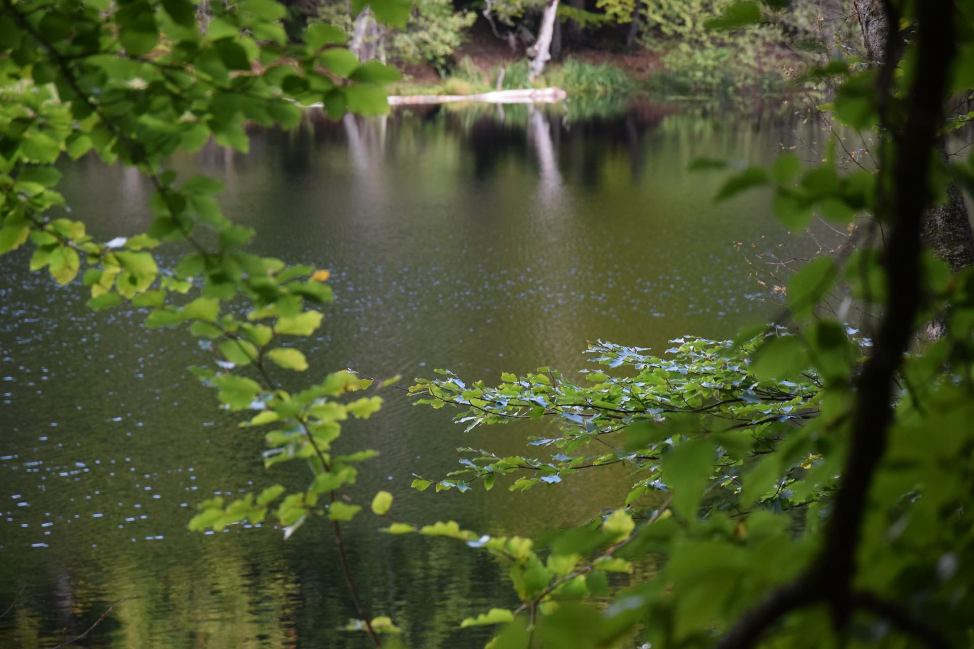 Przewodnik Magazynu Kaszuby: Lasy Mirachowskie 22