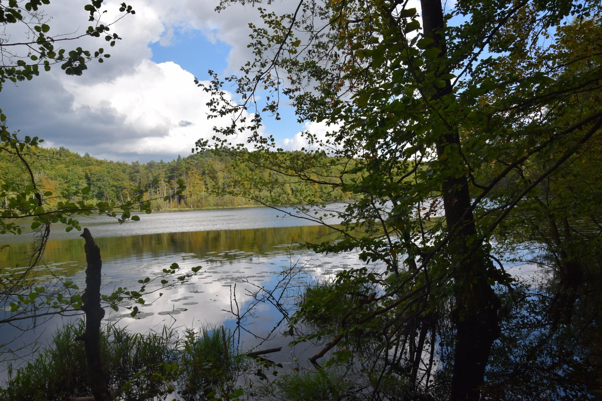 Przewodnik Magazynu Kaszuby: Lasy Mirachowskie 24