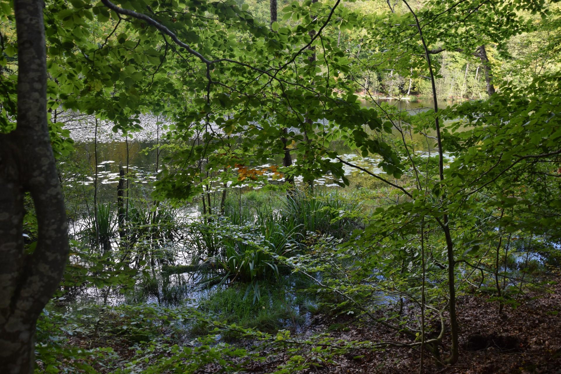 Przewodnik Magazynu Kaszuby: Lasy Mirachowskie 25