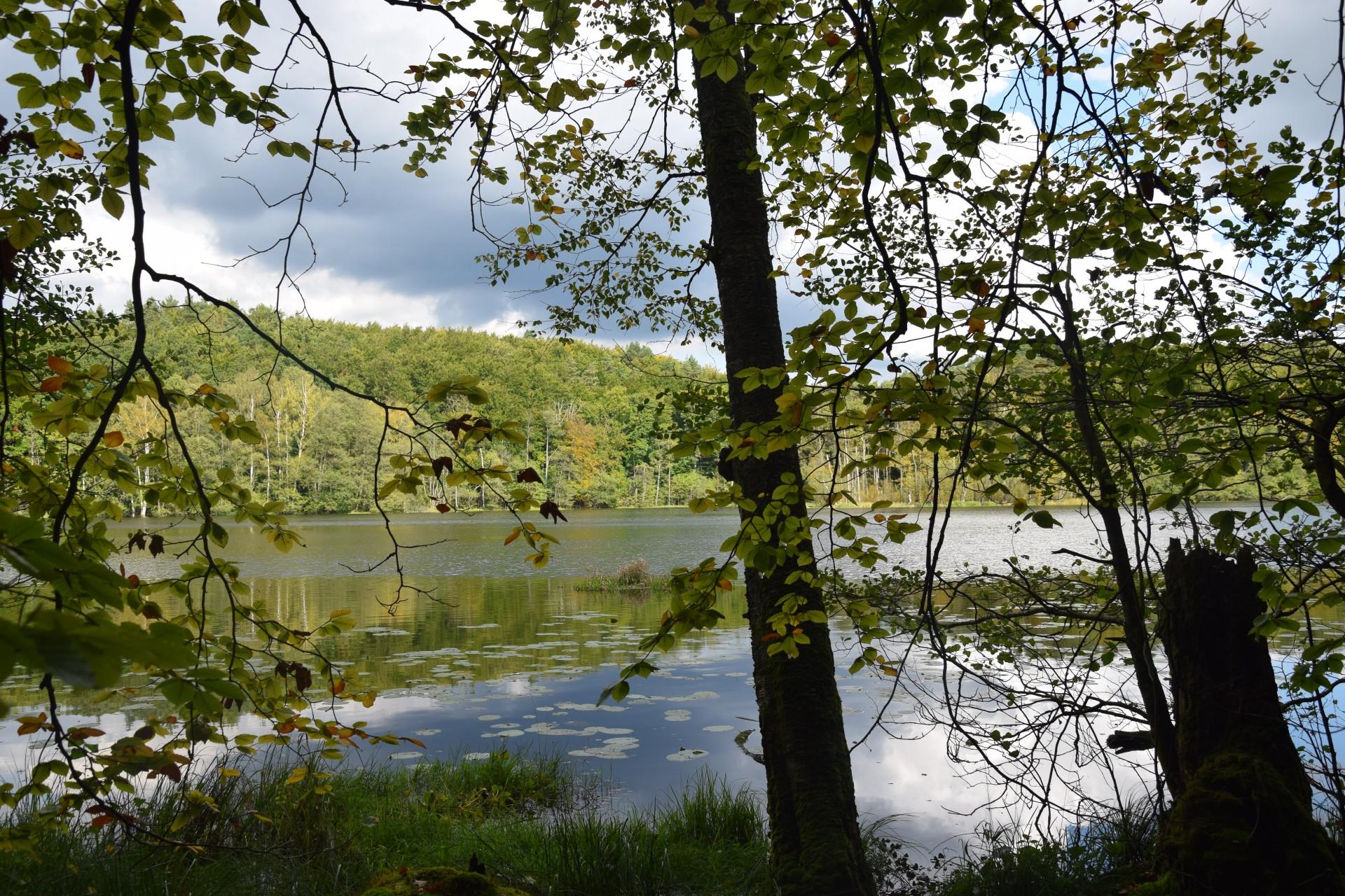 Przewodnik Magazynu Kaszuby: Lasy Mirachowskie 26