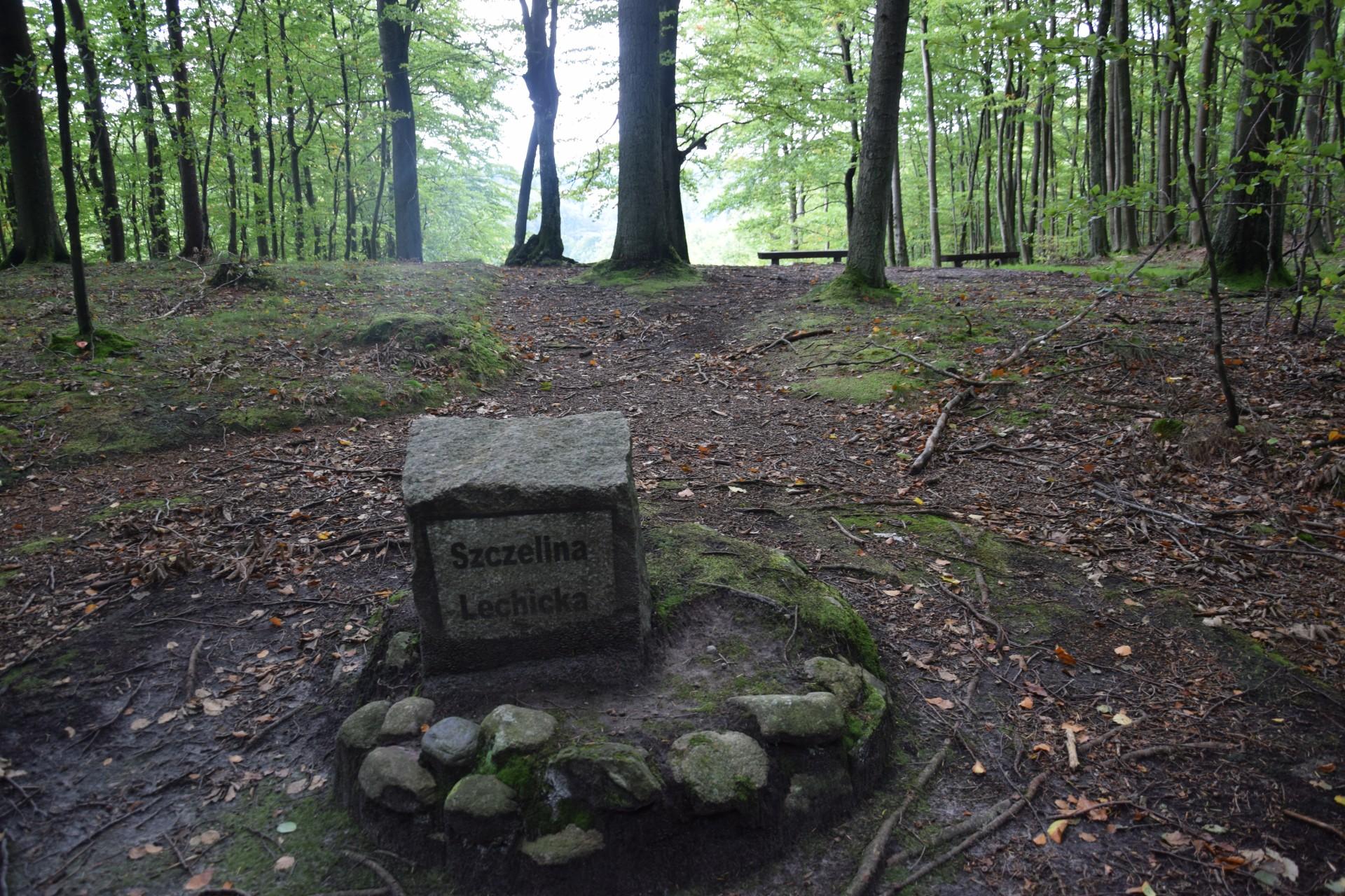 Przewodnik Magazynu Kaszuby: Lasy Mirachowskie 30