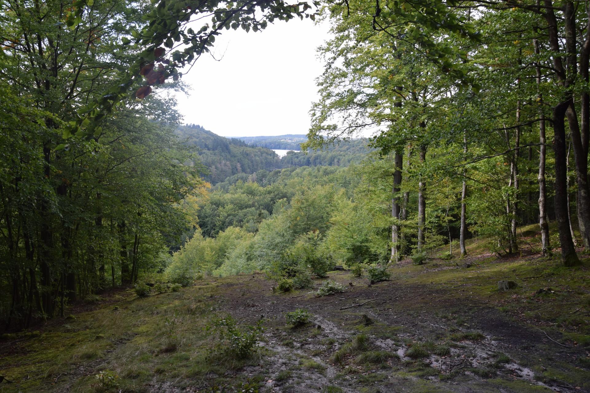 Przewodnik Magazynu Kaszuby: Lasy Mirachowskie 31