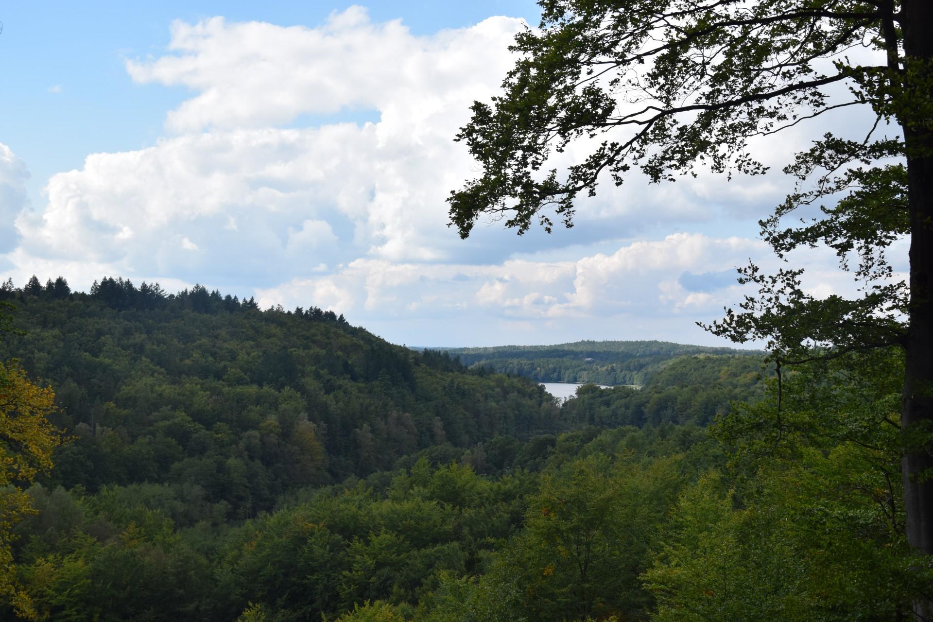 Przewodnik Magazynu Kaszuby: Lasy Mirachowskie 33