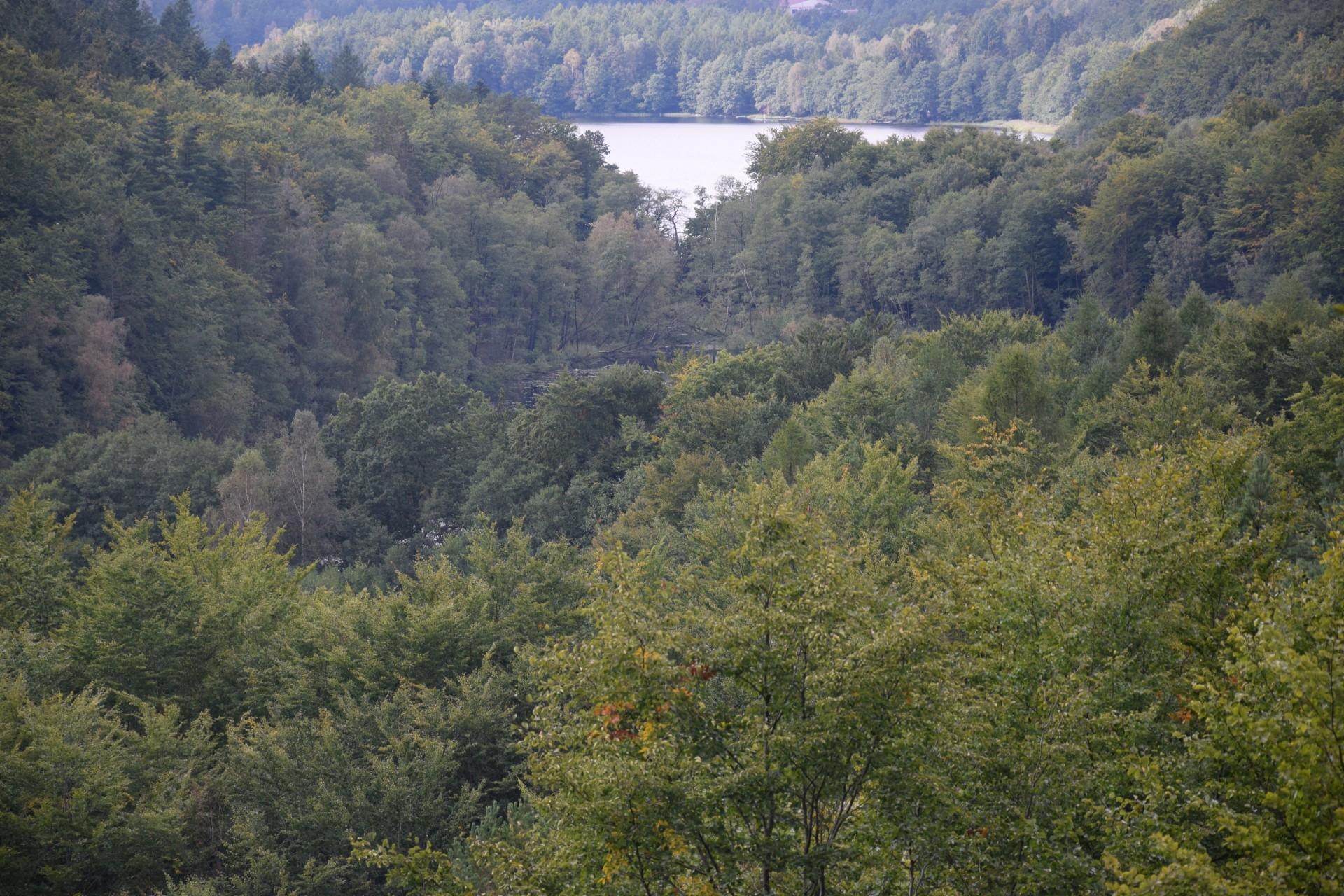 Przewodnik Magazynu Kaszuby: Lasy Mirachowskie 34