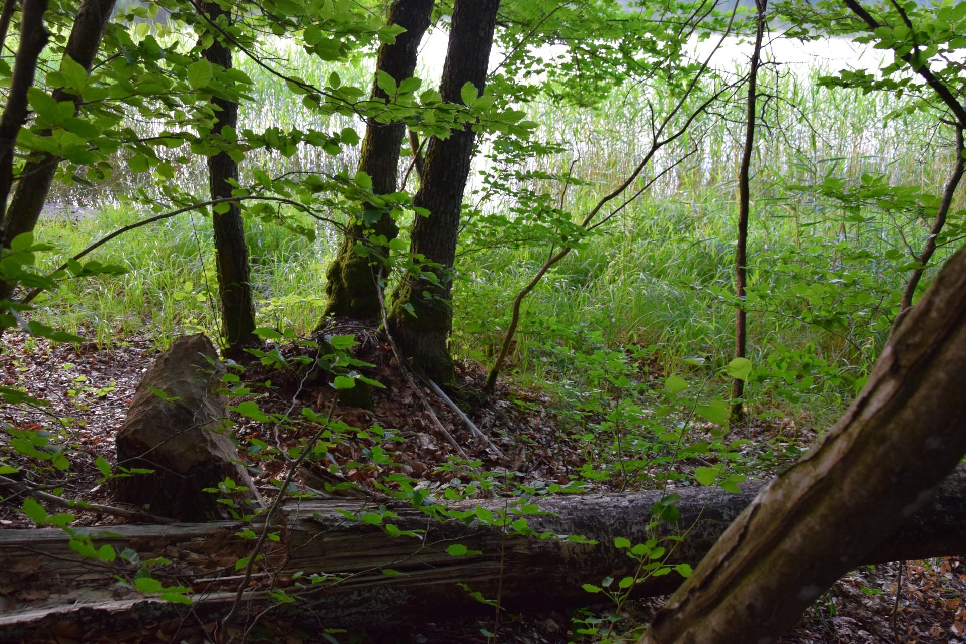Przewodnik Magazynu Kaszuby: Lasy Mirachowskie 48
