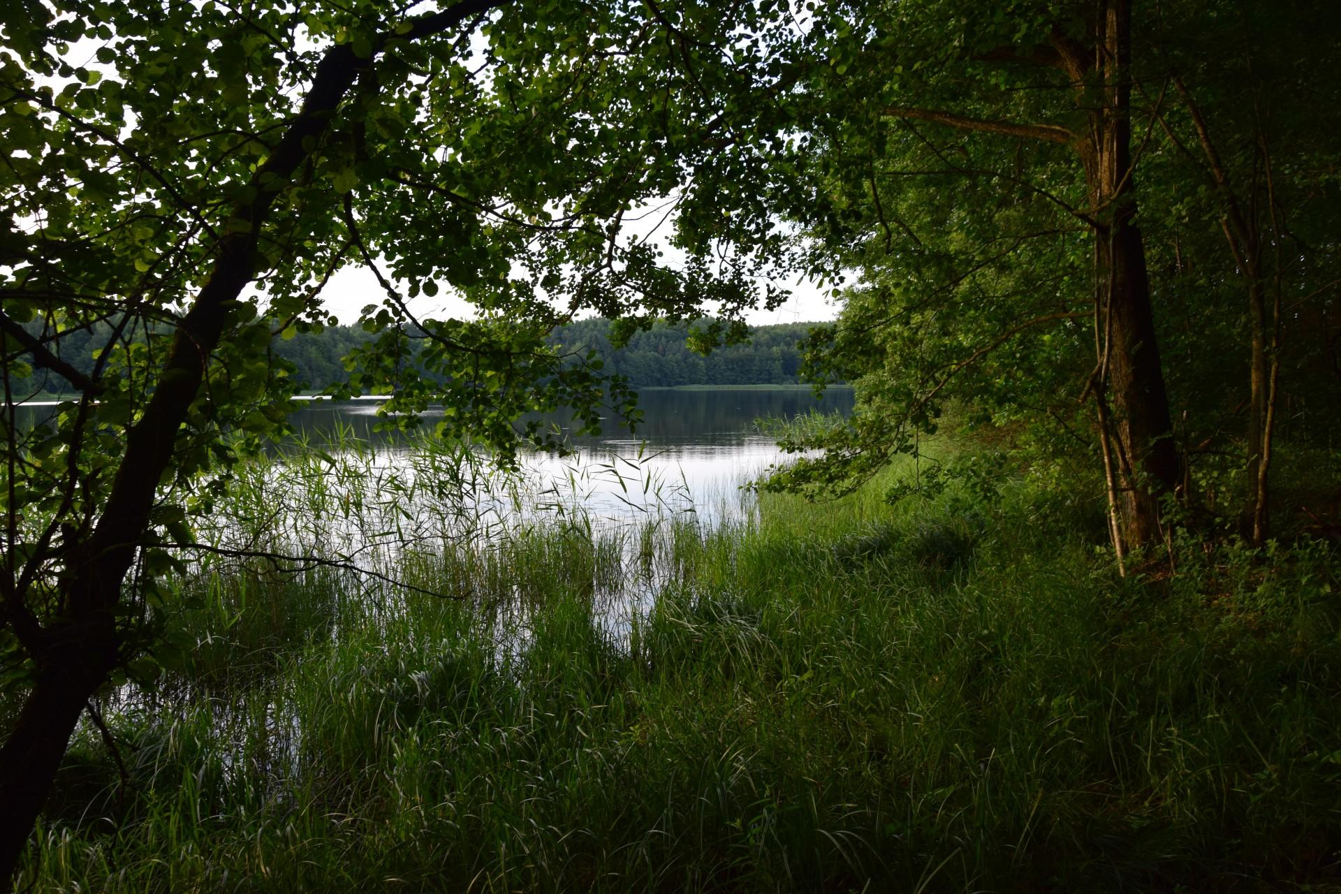 Przewodnik Magazynu Kaszuby: Lasy Mirachowskie 49