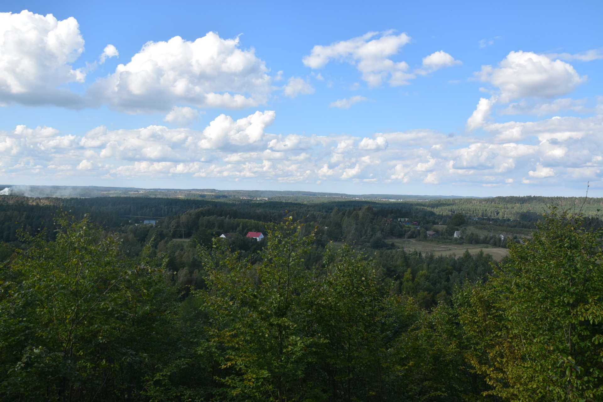 Przewodnik Magazynu Kaszuby: Lasy Mirachowskie 5