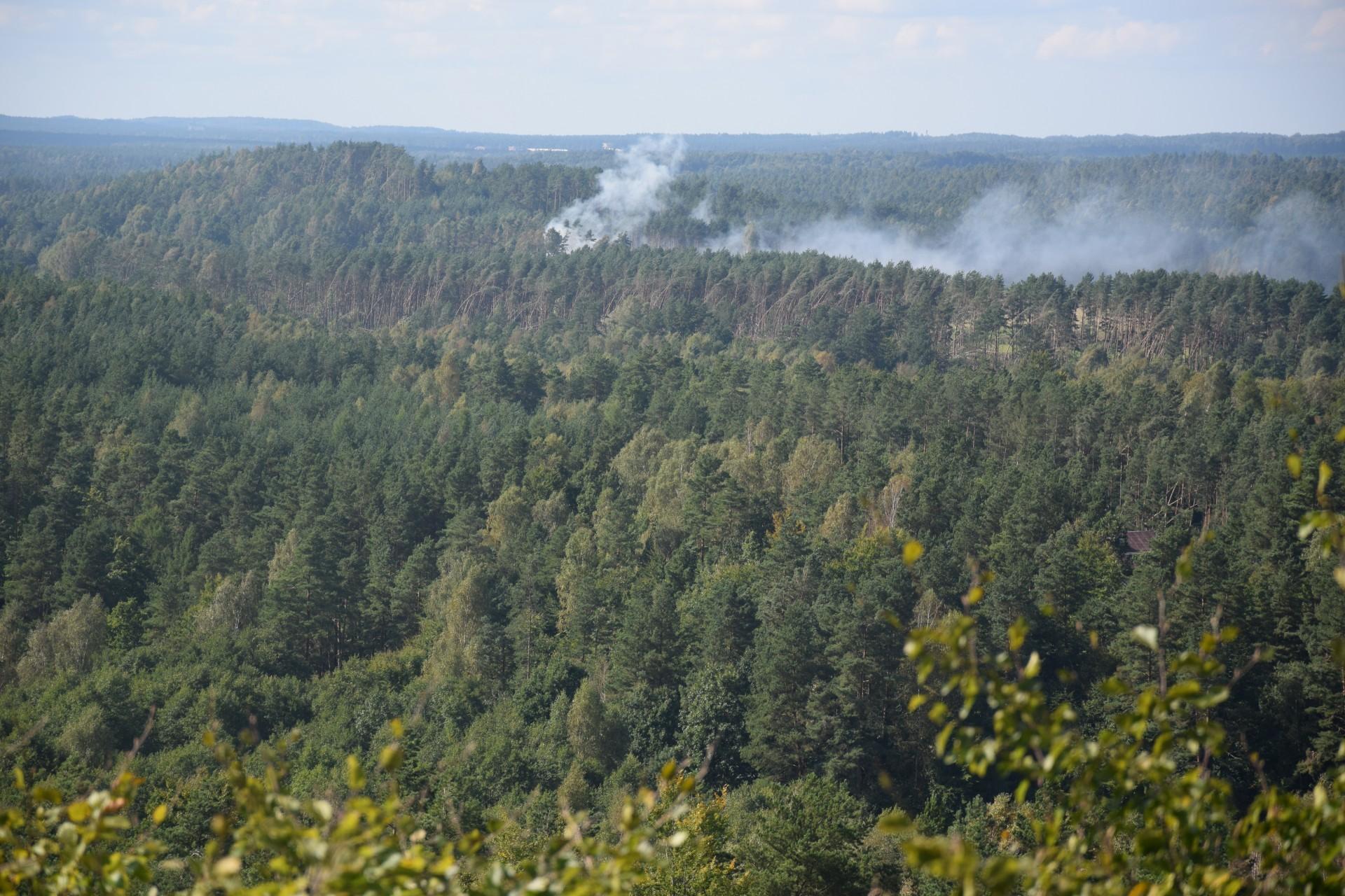 Przewodnik Magazynu Kaszuby: Lasy Mirachowskie 6