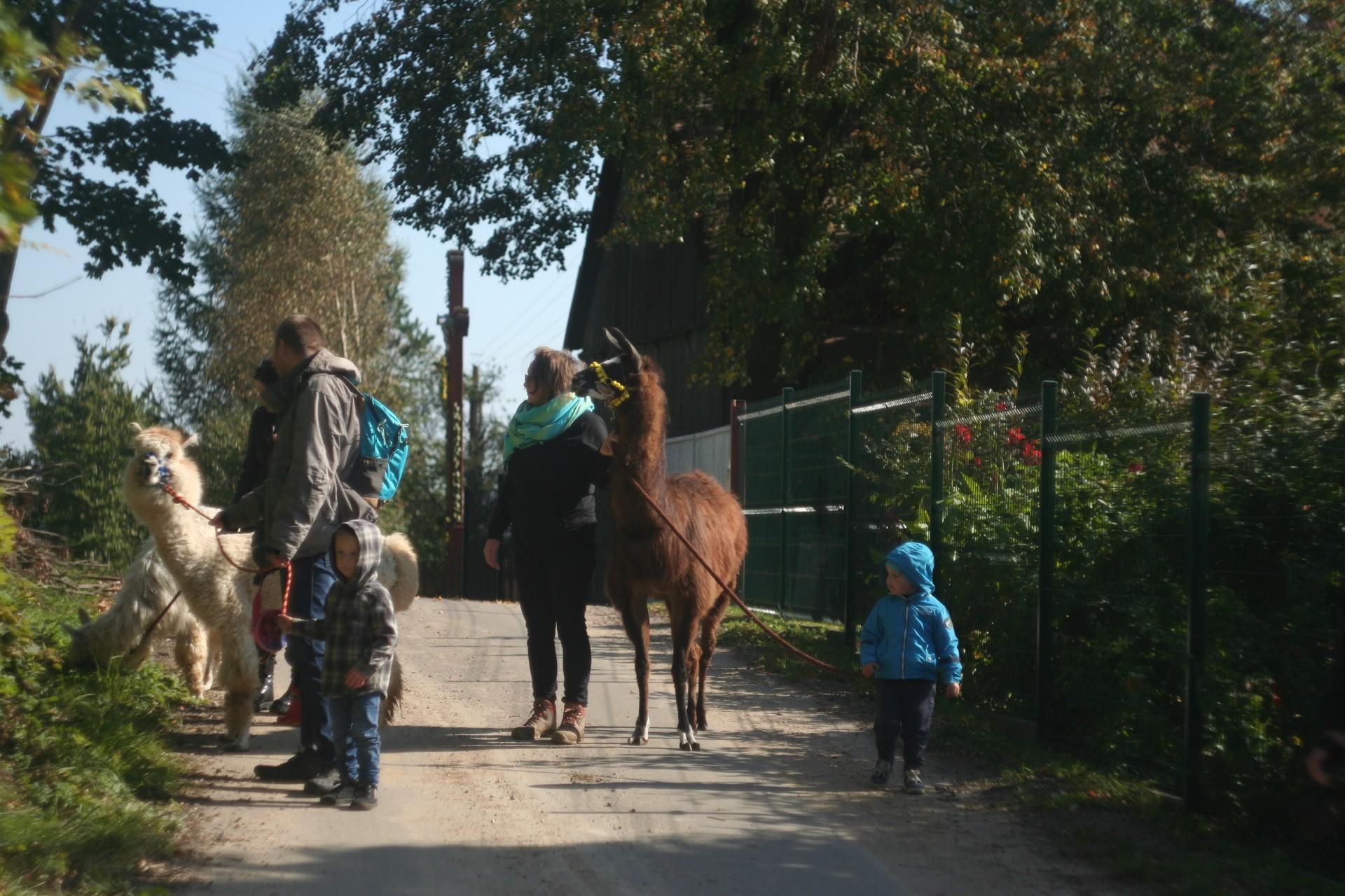 Powolna niedziela czyli alpaki na Kaaszubach 4