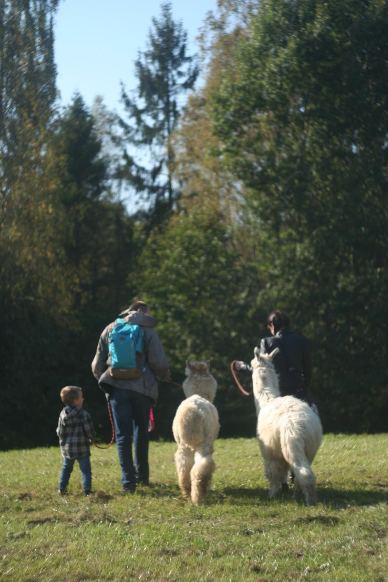 Powolna niedziela czyli alpaki na Kaaszubach 5
