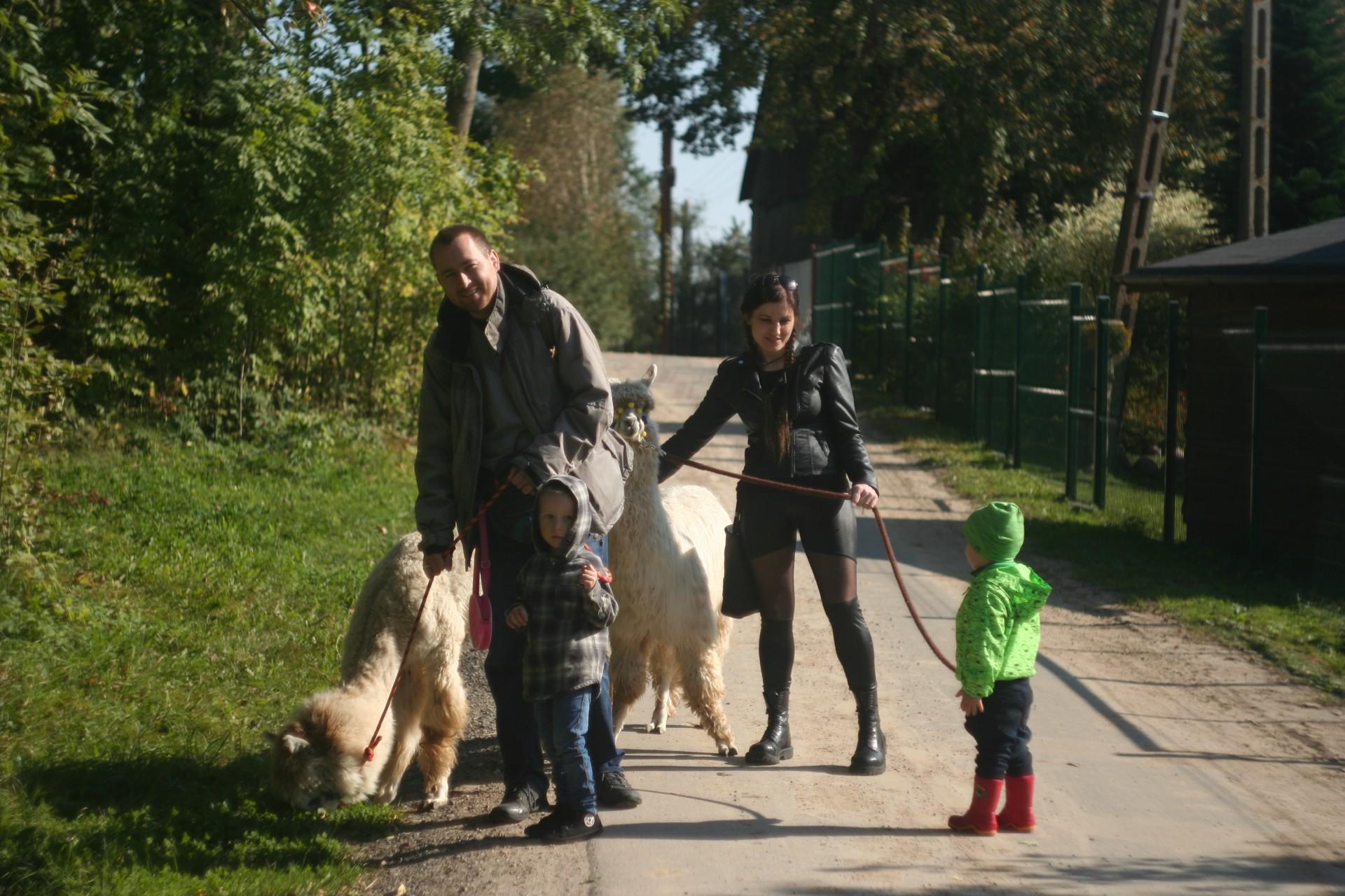 Powolna niedziela czyli alpaki na Kaaszubach 7