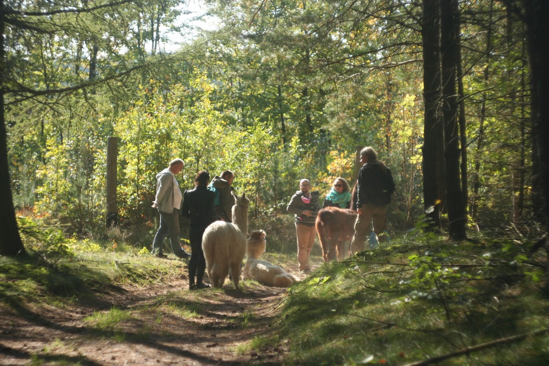 Powolna niedziela czyli alpaki na Kaaszubach 8