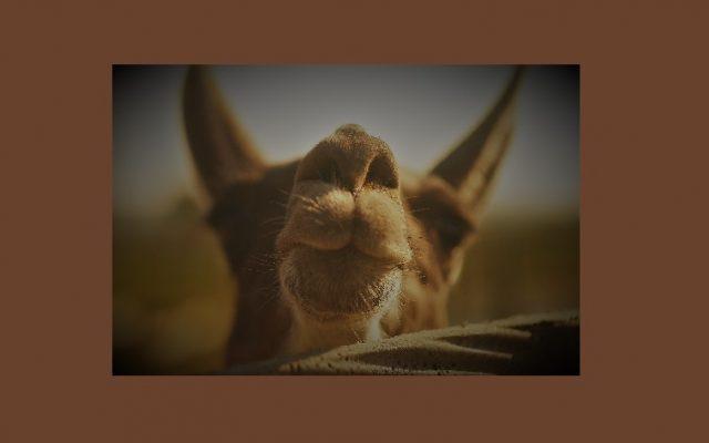 Powolna niedziela czyli alpaki na Kaszubach