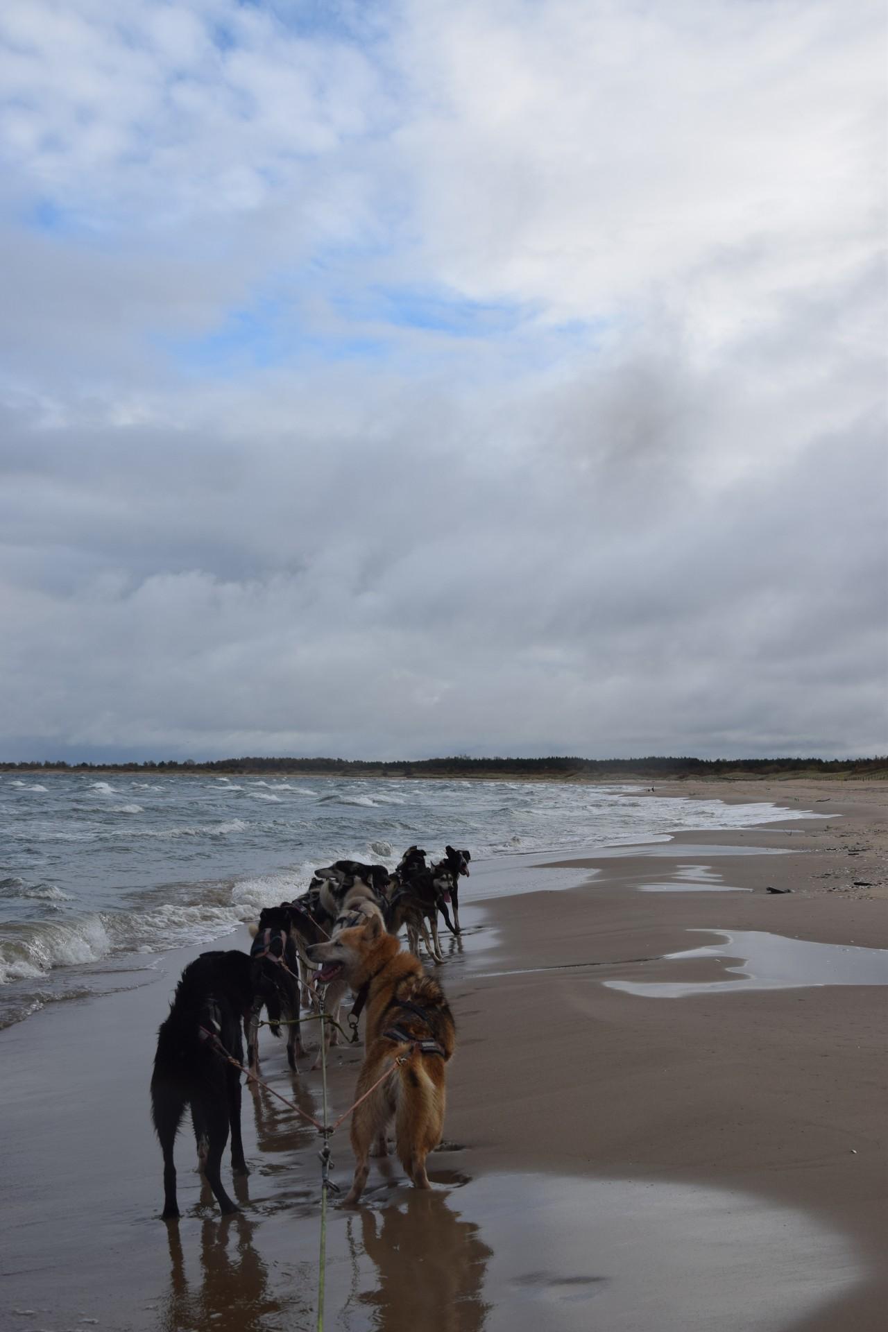 Trening z psami. Morze w tyłek, deszcz na głowę 2