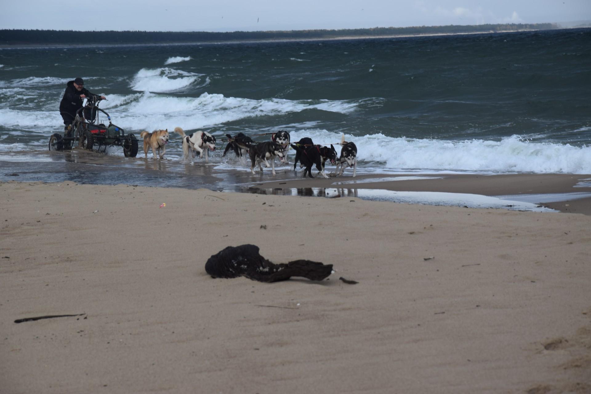 Trening z psami. Morze w tyłek, deszcz na głowę 3