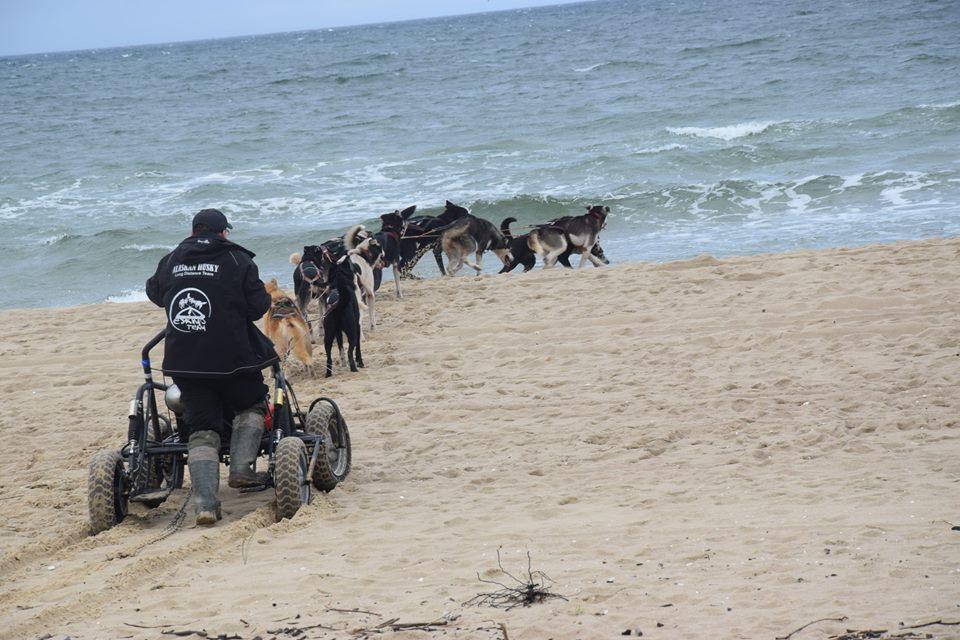 Trening z psami. Morze w tyłek, deszcz na głowę 7