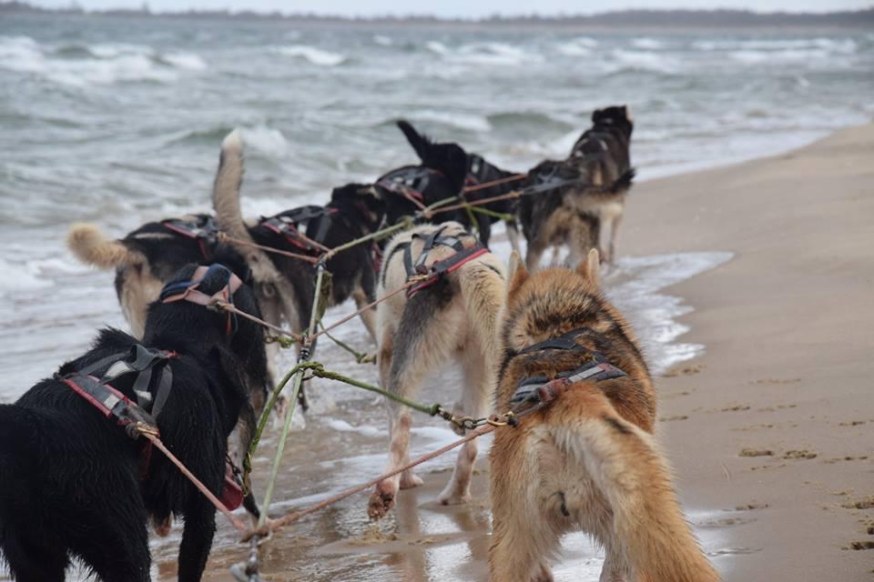 Trening z psami. Morze w tyłek, deszcz na głowę 8