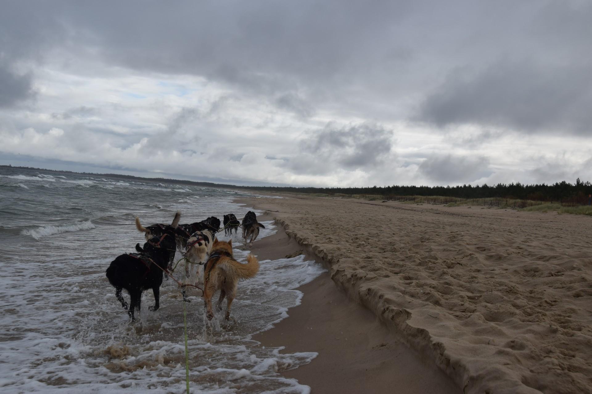 Trening z psami. Morze w tyłek, deszcz na głowę