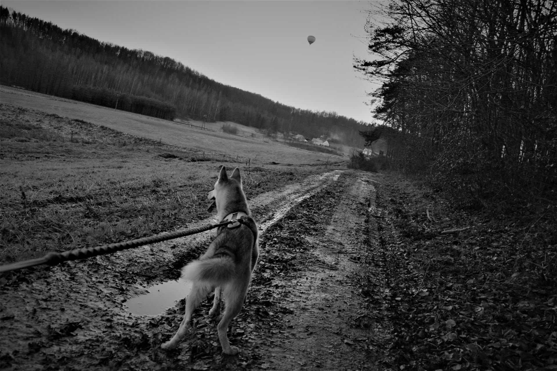 Dogtrekking czyli z psem w sercu [Kaszub] 8