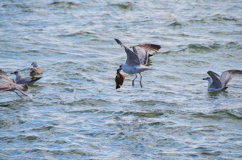 Katastrofa ekologiczna w Zatoce Puckiej? [KONTYNUACJA TEMATU] 1