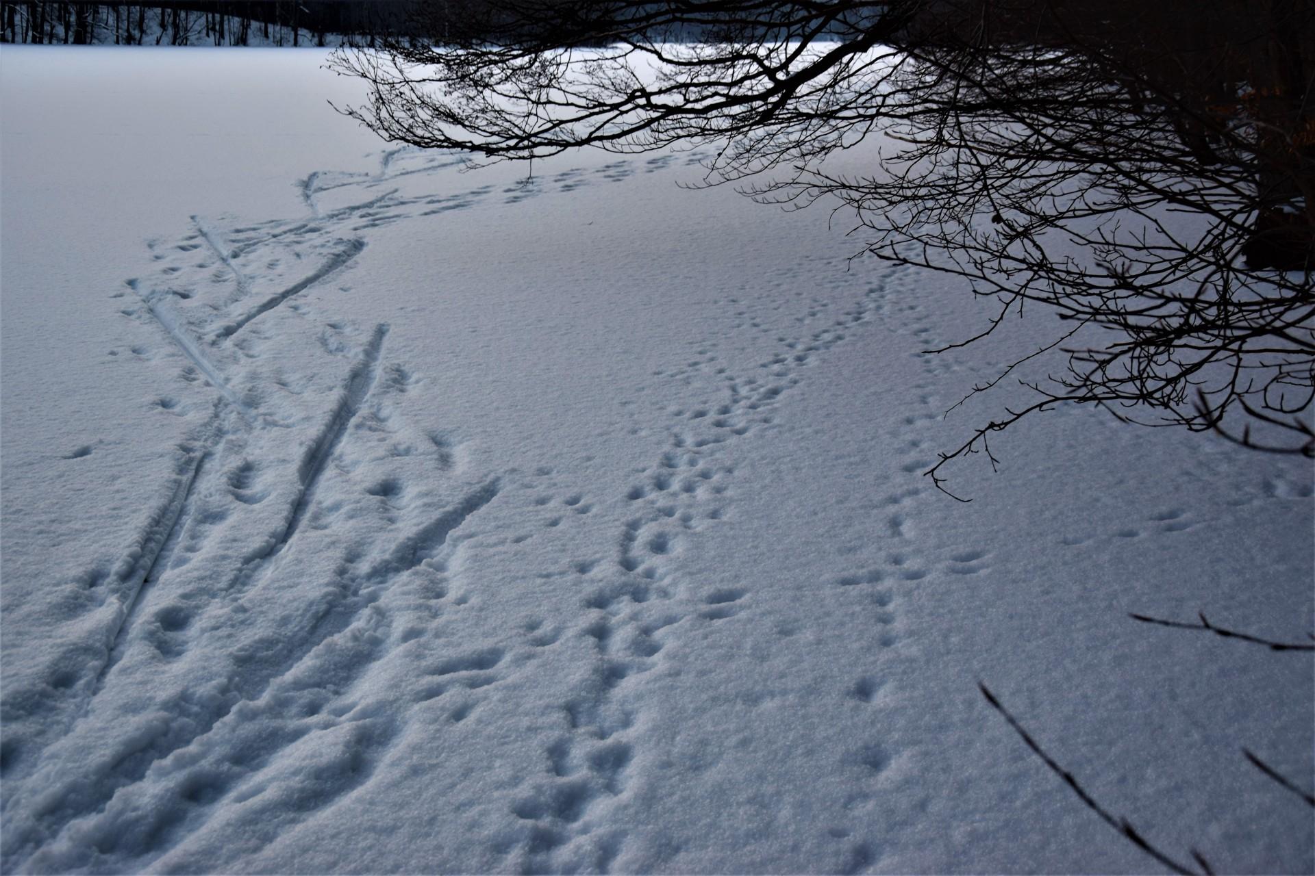 Lasy Mirachowskie zimą czyli Buschcraft w wersji light 13