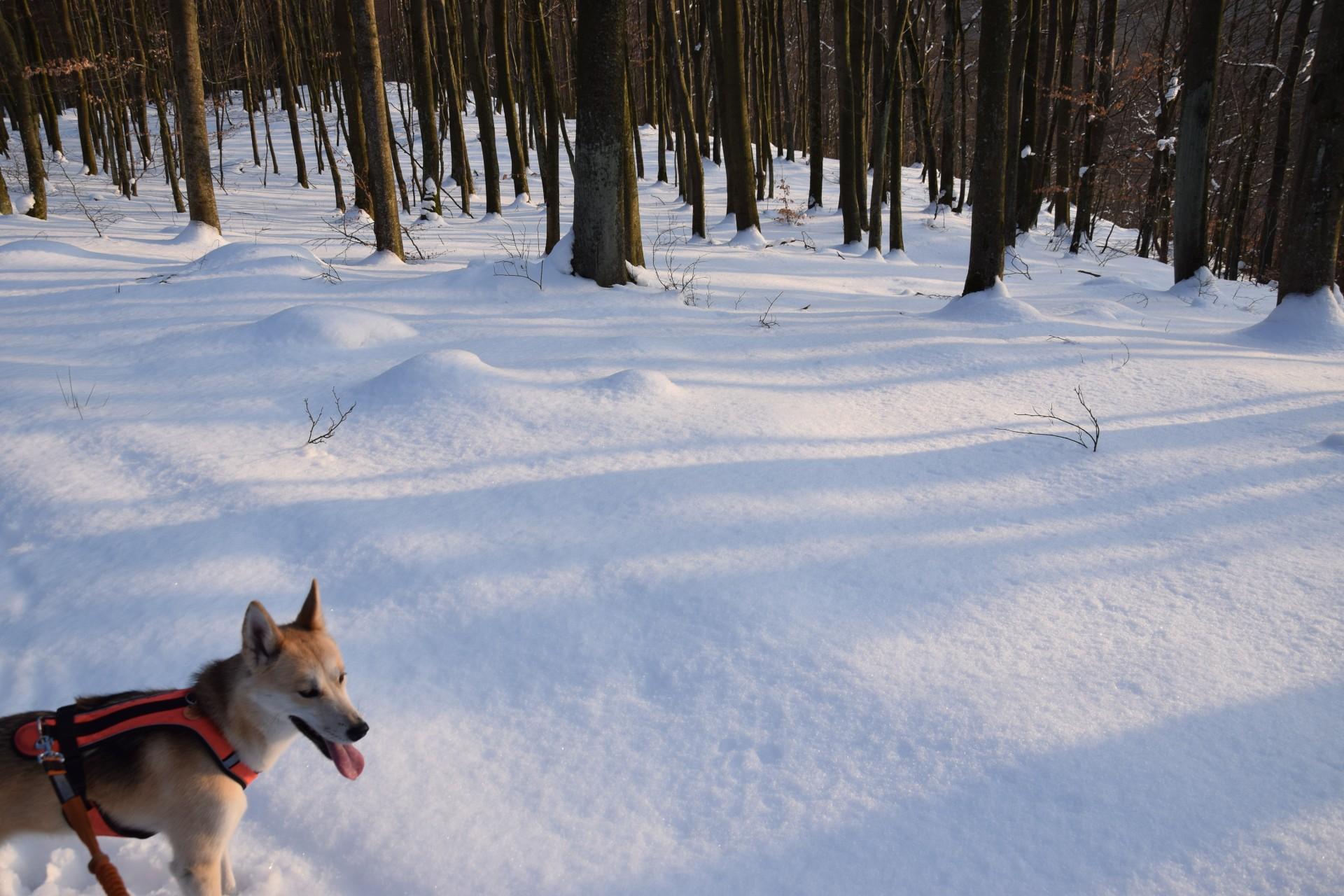 Lasy Mirachowskie zimą czyli Buschcraft w wersji light 19