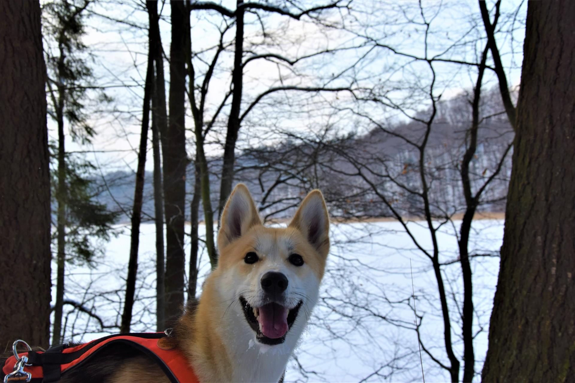 Lasy Mirachowskie zimą czyli Buschcraft w wersji light 4